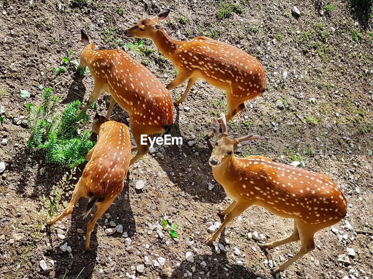 High Angle View Of Deer On Field