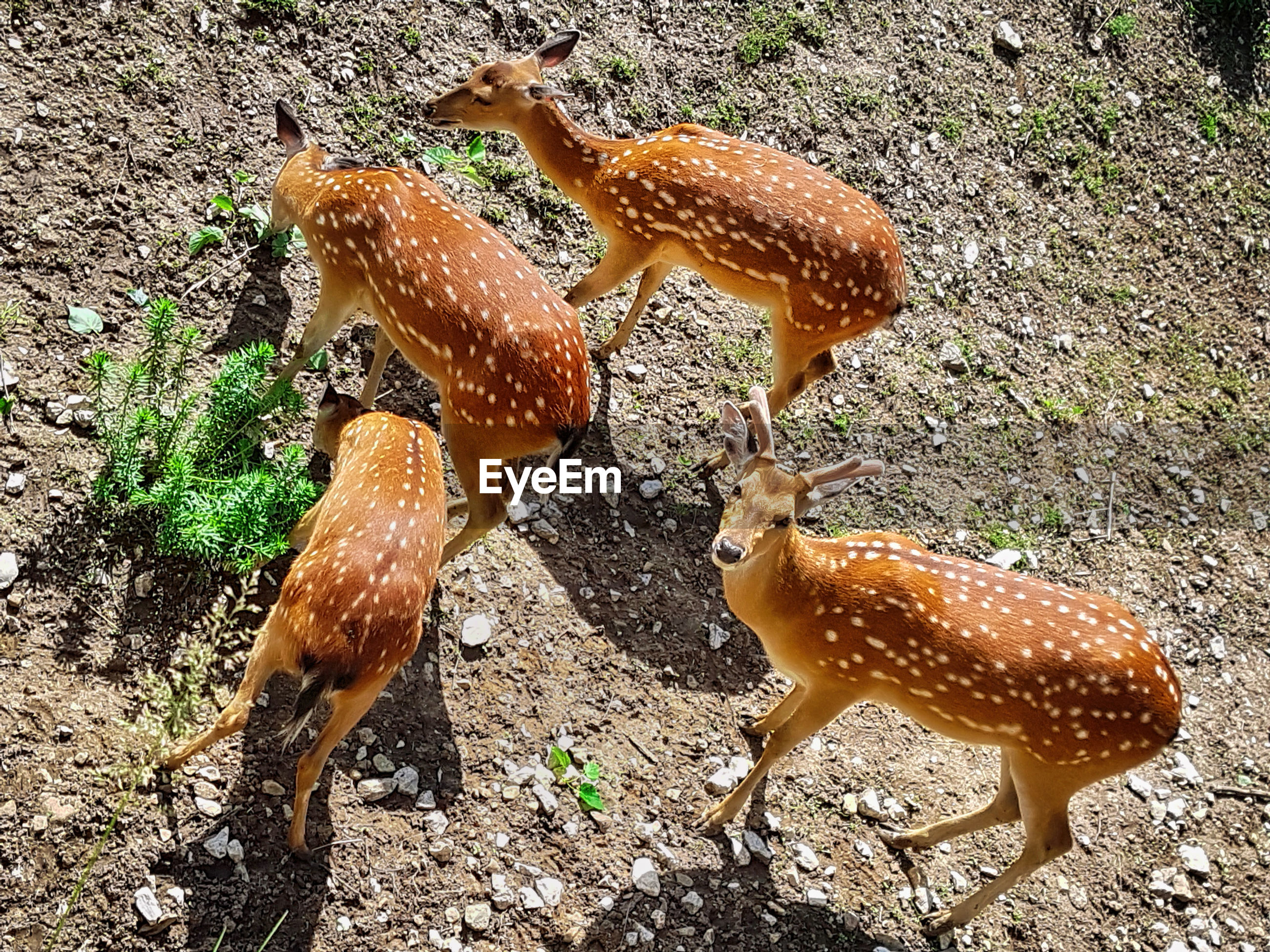 High Angle View Of Deer On Field