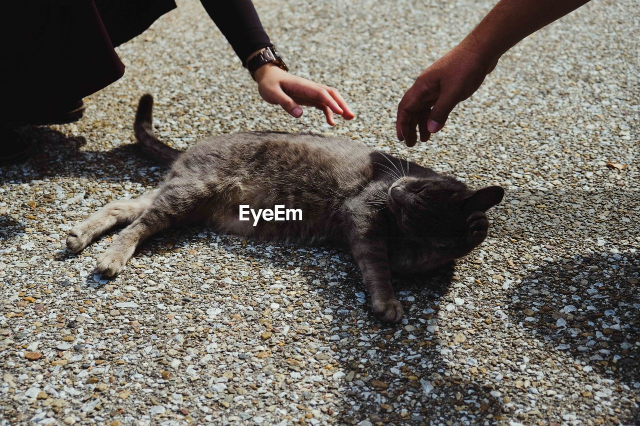 mammal, pets, domestic, one animal, domestic animals, vertebrate, human hand, real people, hand, day, people, human body part, high angle view, unrecognizable person, nature, outdoors, cat, pet owner, finger