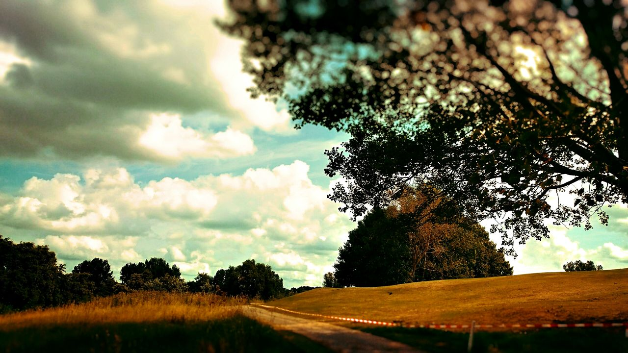 tree, nature, landscape, sky, scenics, tranquility, tranquil scene, no people, beauty in nature, field, growth, cloud - sky, day, outdoors, grass, road, rural scene