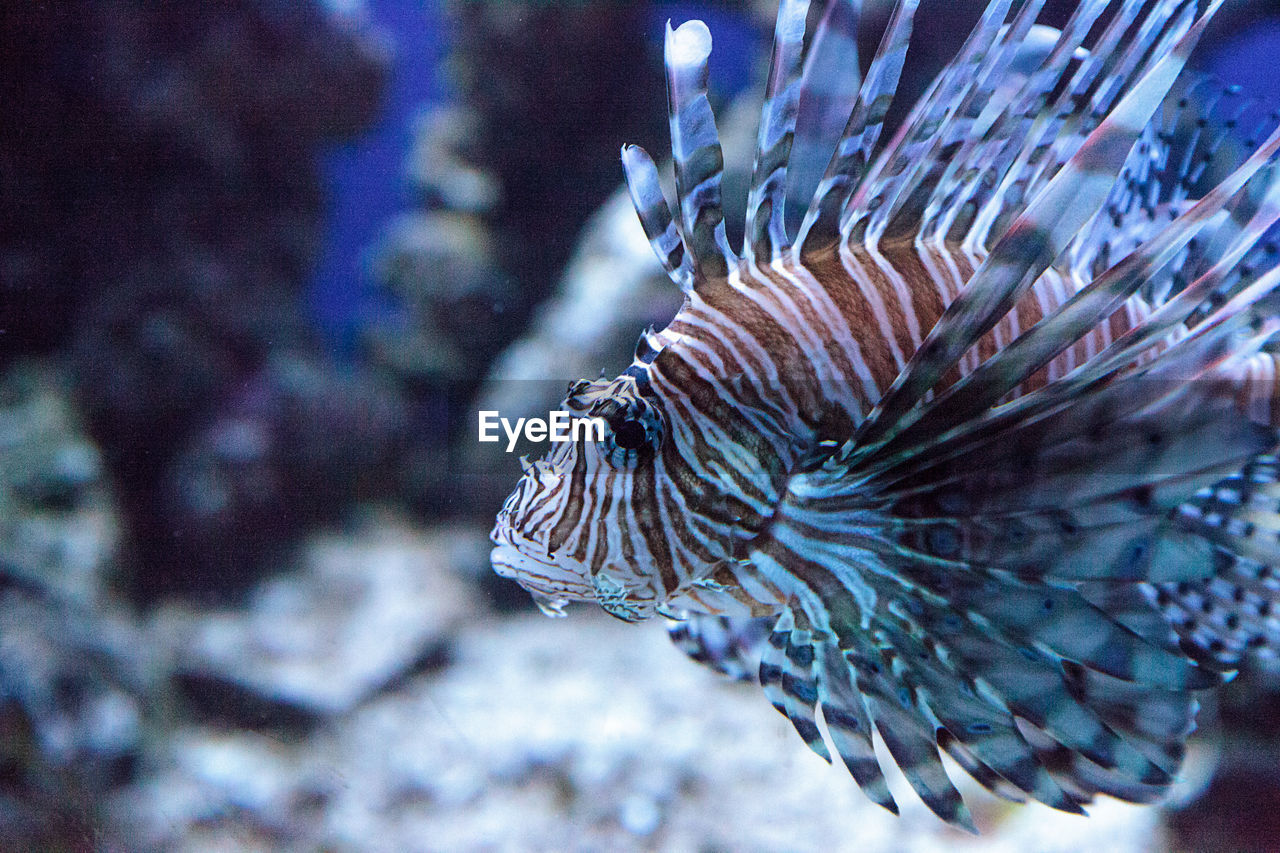 underwater, sea life, animal themes, one animal, undersea, animals in the wild, sea, animal wildlife, no people, coral, close-up, nature, water, swimming, fish, clown fish, beauty in nature, day, sea anemone, outdoors