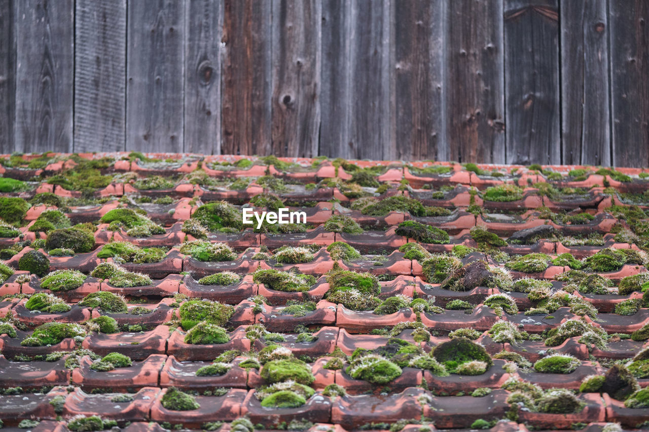 in a row, no people, food and drink, wood - material, day, architecture, nature, food, side by side, large group of objects, abundance, plant, arrangement, built structure, healthy eating, outdoors, freshness, growth, leaf, agriculture