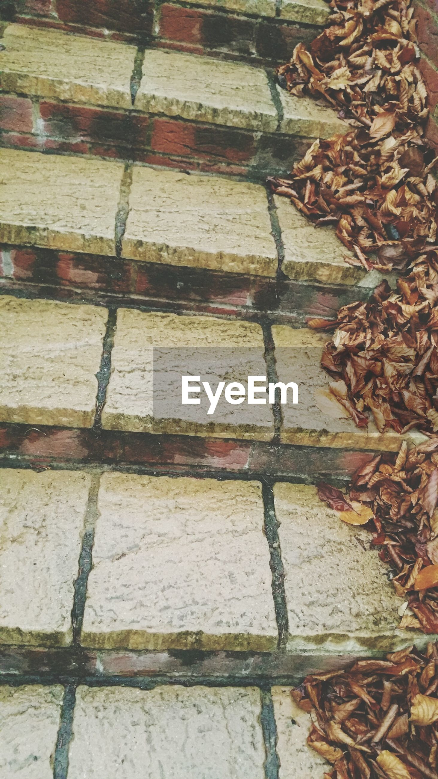 High angle view of leaves on steps