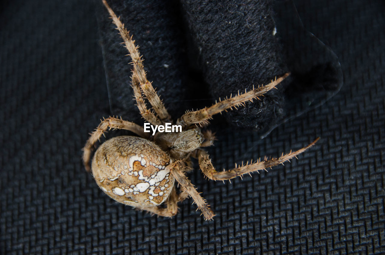 close-up, one animal, animal wildlife, animal themes, animals in the wild, animal, no people, invertebrate, insect, high angle view, indoors, arachnid, spider, pattern, rope, zoology, selective focus, textile, arthropod, day, animal leg