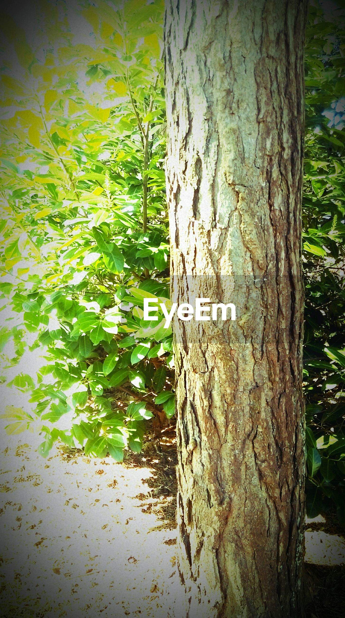 tree trunk, tree, growth, nature, textured, tranquility, forest, bark, day, no people, green color, sunlight, outdoors, wood - material, close-up, beauty in nature, branch, growing, rough, tranquil scene