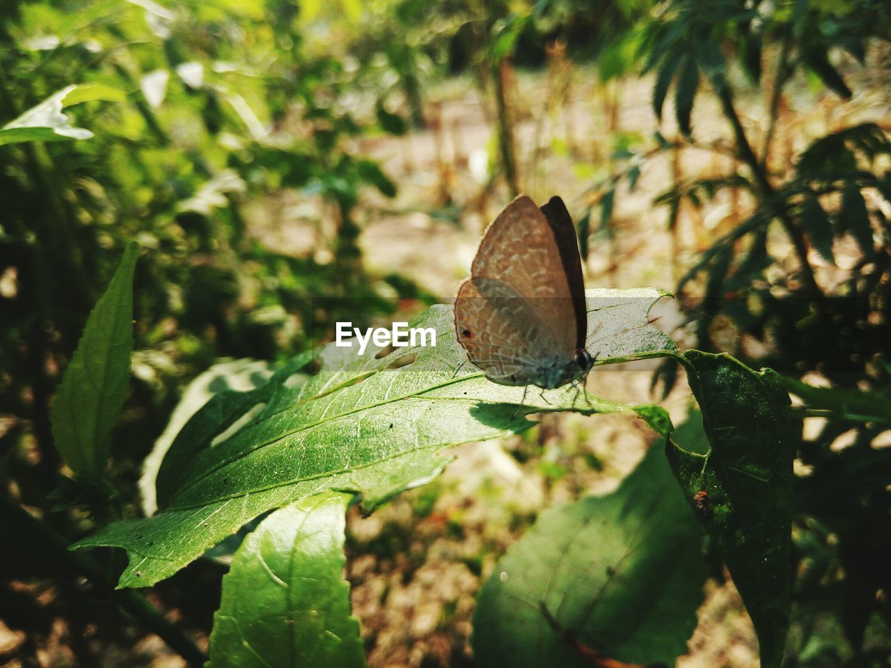 leaf, one animal, green color, animal themes, nature, insect, plant, animals in the wild, day, close-up, no people, outdoors, growth, focus on foreground, animal wildlife, butterfly - insect, beauty in nature, freshness