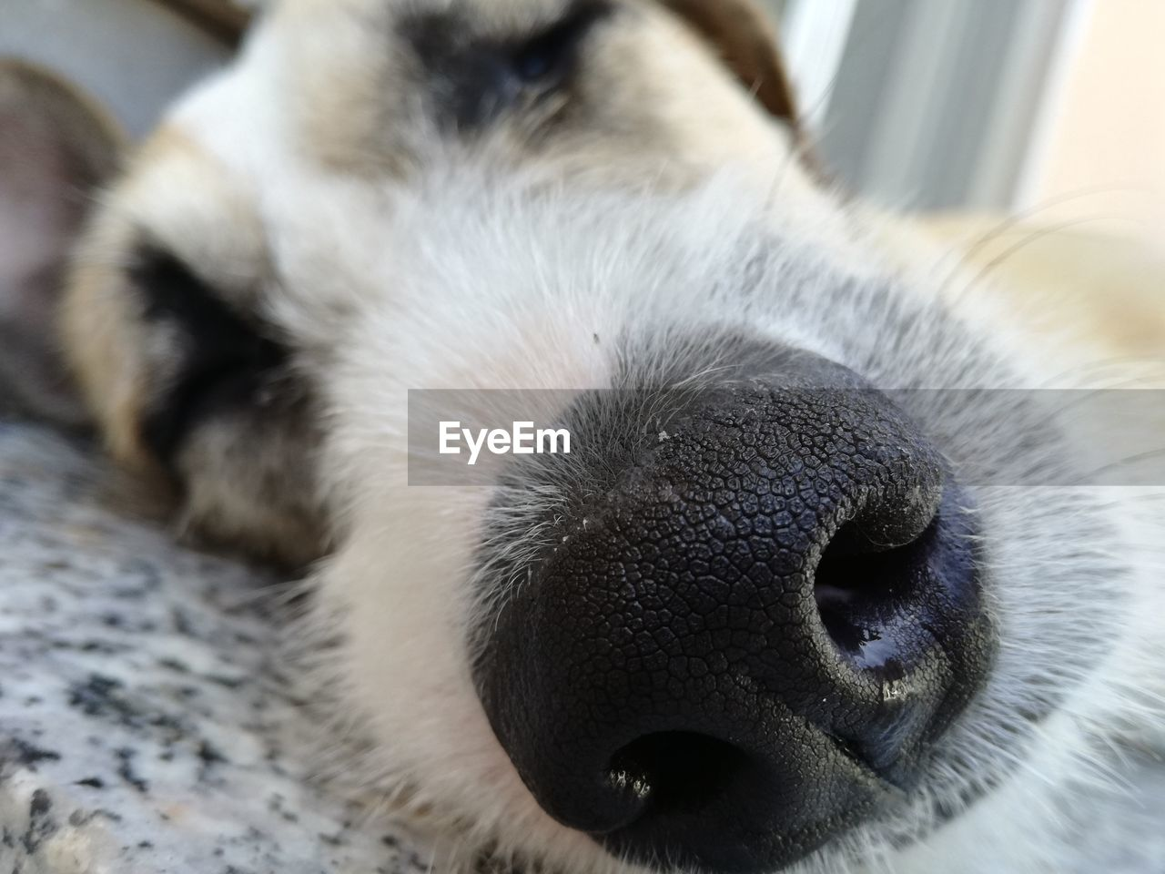 one animal, animal themes, mammal, sleeping, pets, dog, domestic animals, eyes closed, close-up, relaxation, lying down, indoors, no people, day