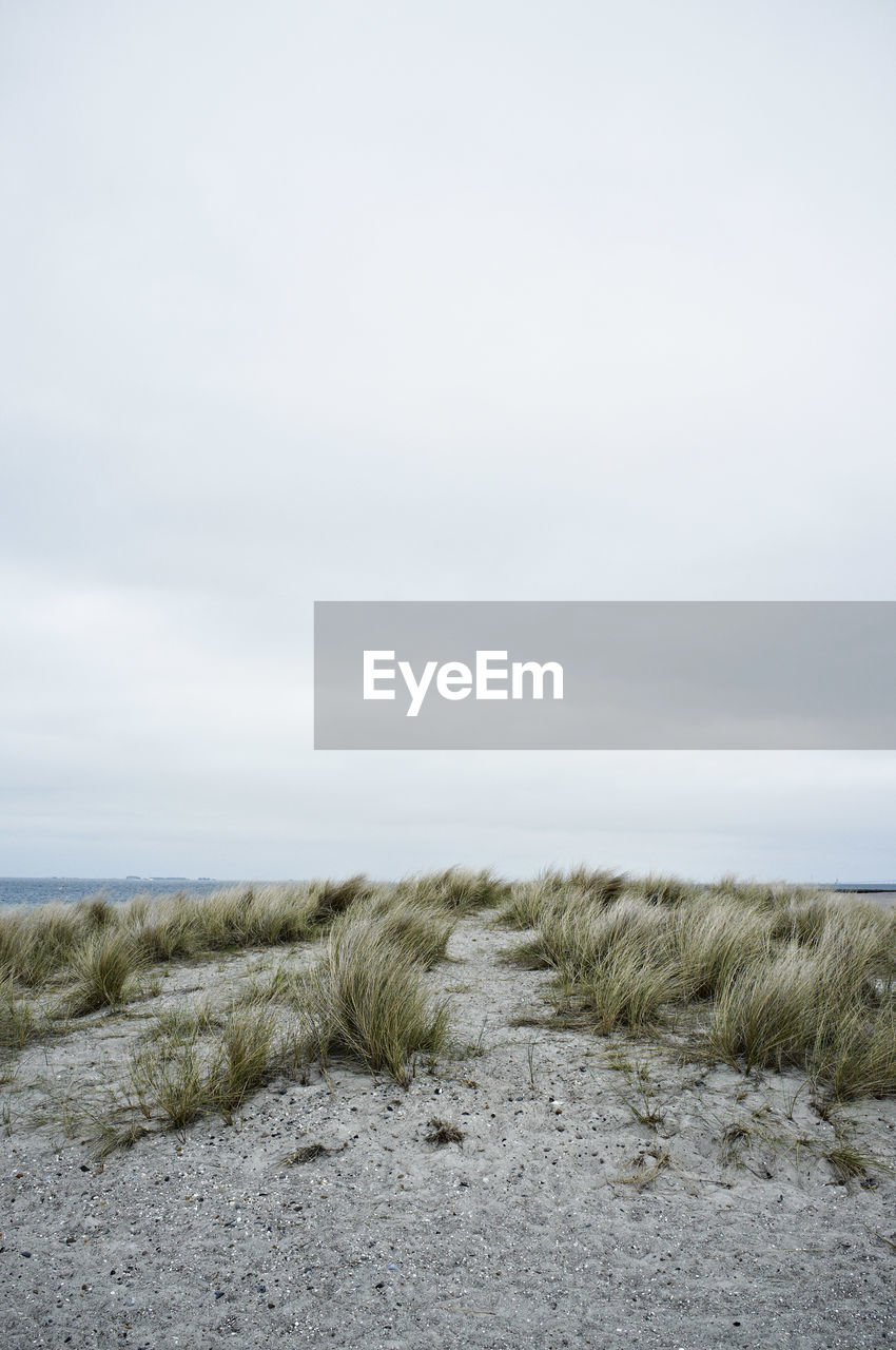 beach, sand, nature, tranquility, tranquil scene, marram grass, grass, scenics, sea, sky, day, horizon over water, no people, outdoors, beauty in nature, sand dune, landscape, water