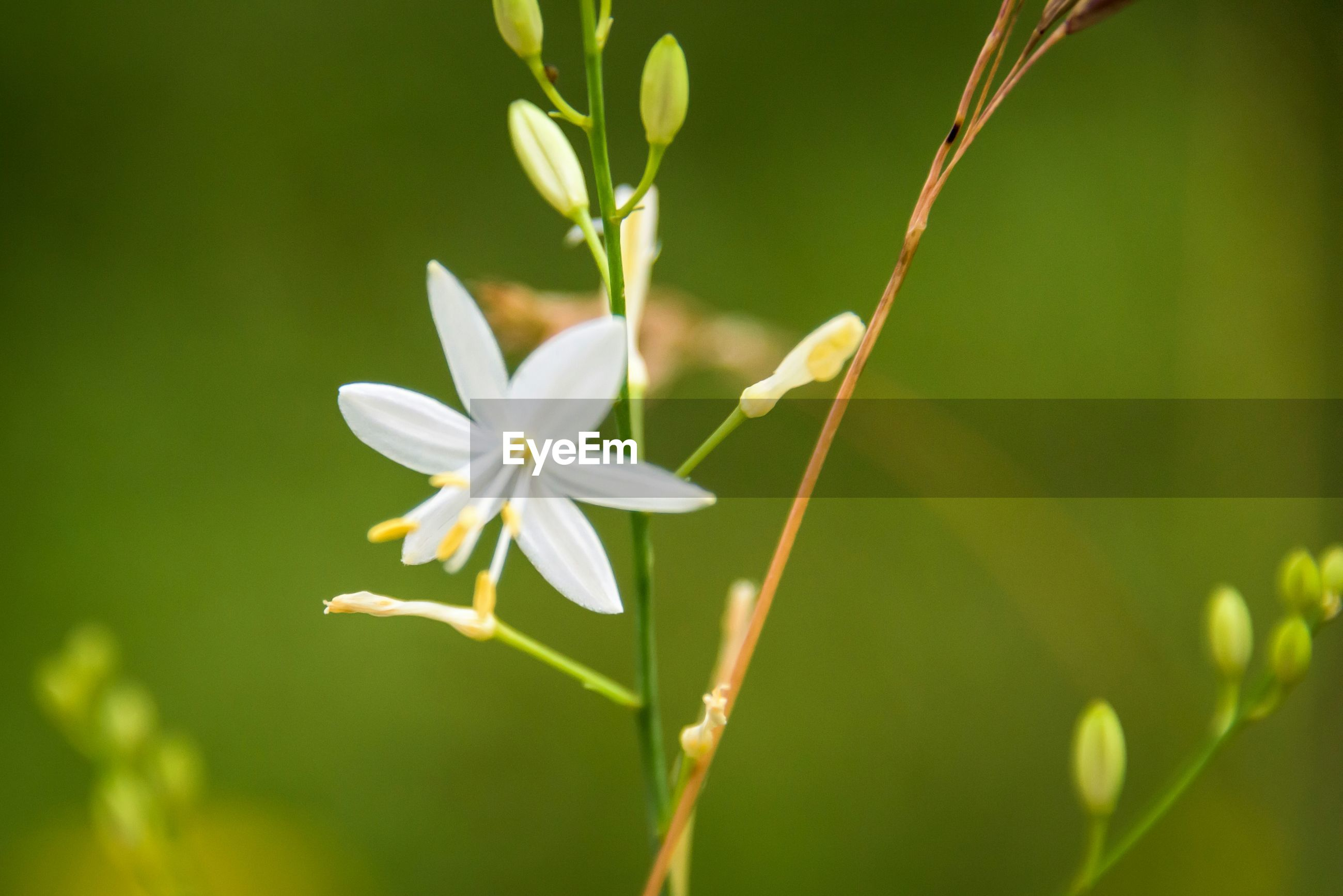 Close-up of white flower blooming in park