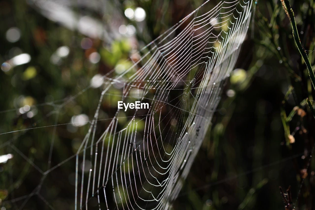 spider web, focus on foreground, web, nature, spider, close-up, no people, day, weaving, outdoors, fragility, one animal, animal themes, beauty in nature, freshness