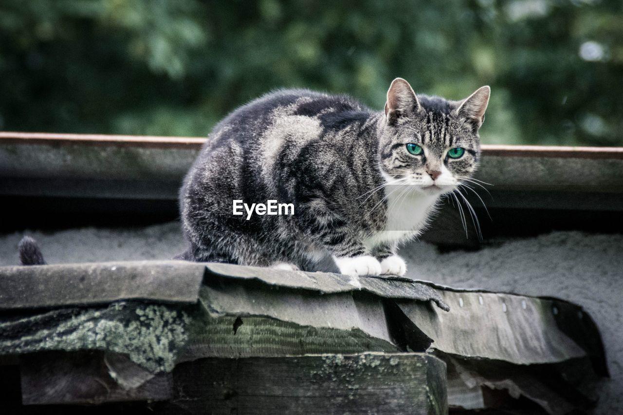 Portrait Of Cat Sitting On Roof