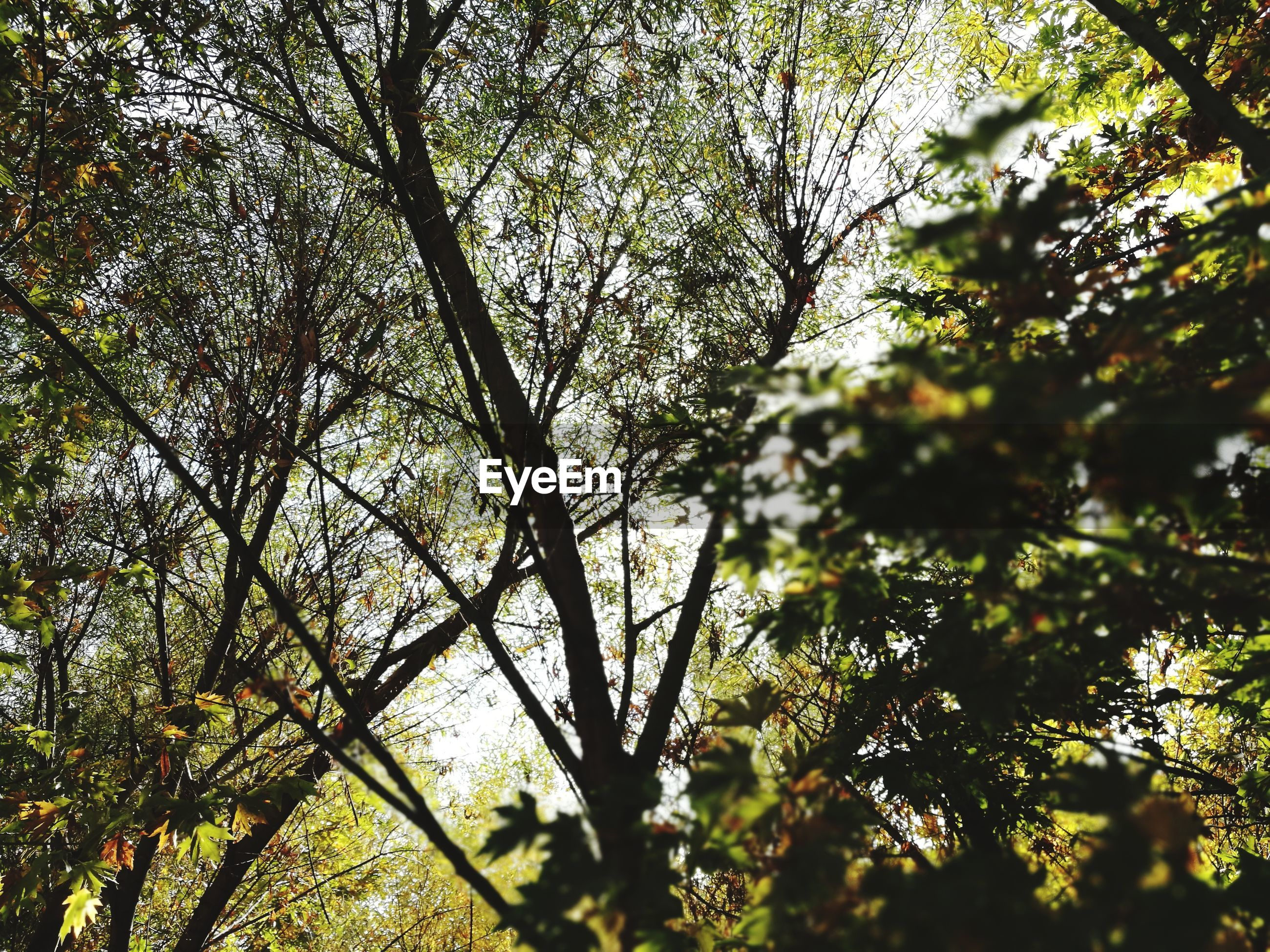 tree, nature, beauty in nature, growth, low angle view, branch, day, outdoors, no people, forest, sky