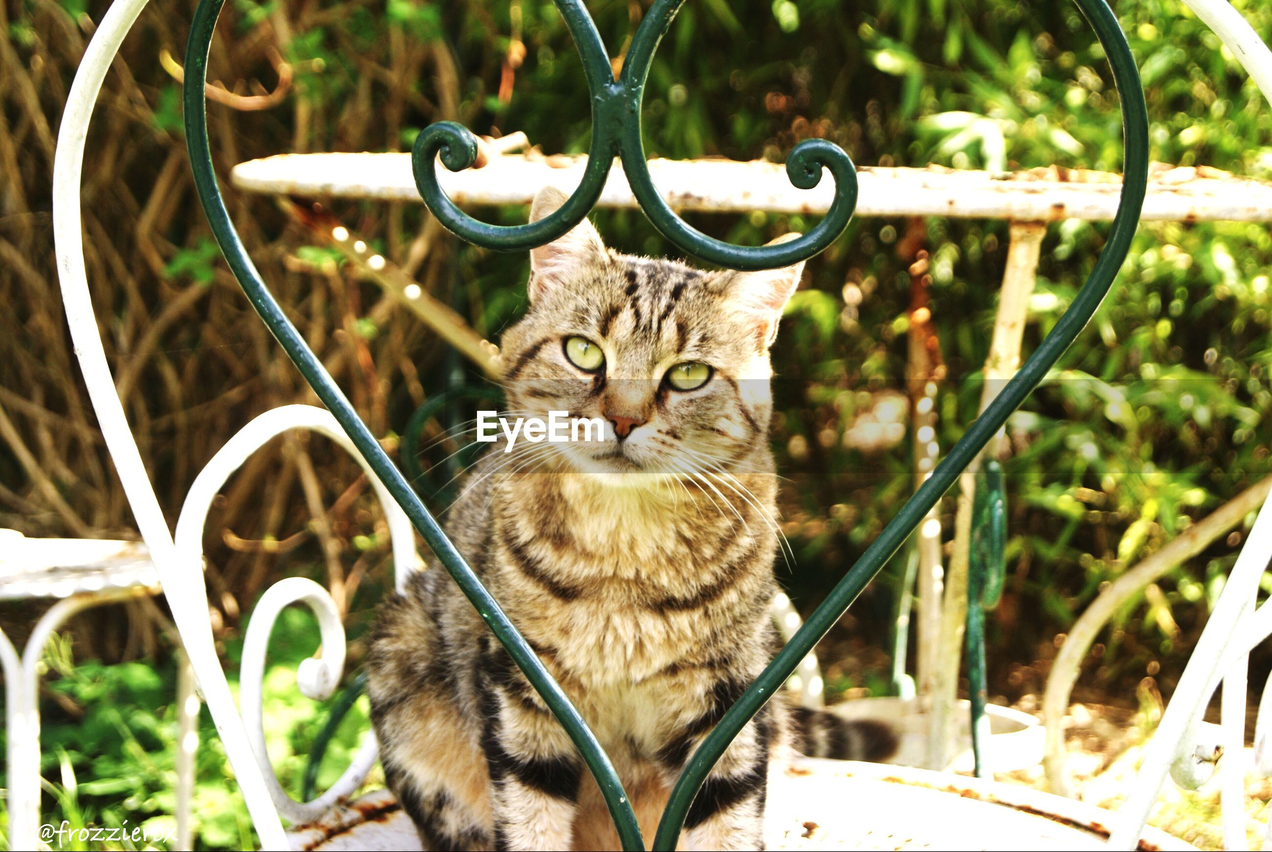domestic cat, animal themes, one animal, cat, mammal, feline, domestic animals, pets, looking at camera, whisker, portrait, focus on foreground, close-up, sitting, day, outdoors, plant, metal, no people, animal head