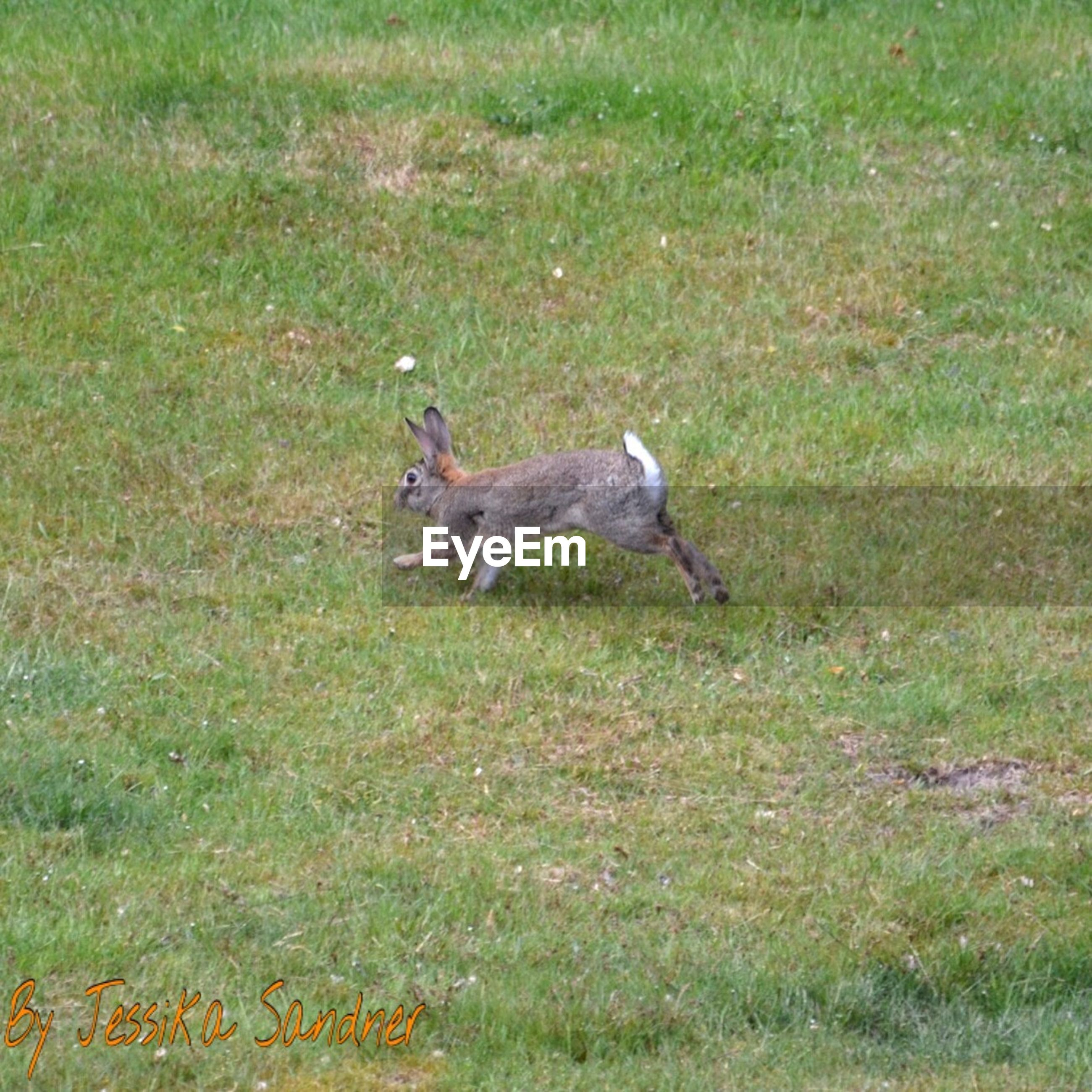 animal themes, grass, animals in the wild, field, one animal, bird, grassy, wildlife, full length, green color, side view, nature, outdoors, day, two animals, no people, growth, high angle view, sunlight, plant