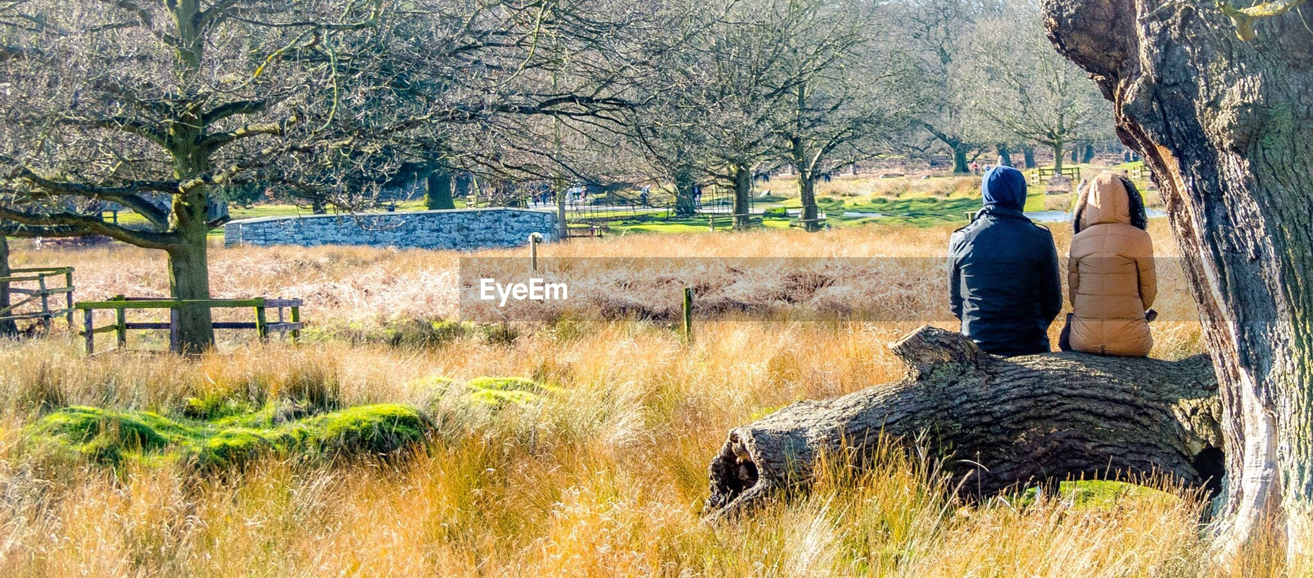 Panoramic view people sitting on tree trunk at bradgate park