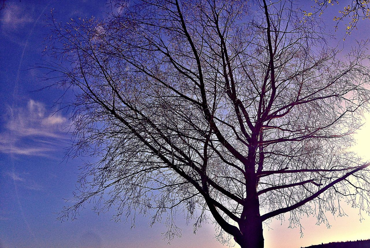 bare tree, tree, branch, sky, nature, low angle view, beauty in nature, tranquility, no people, outdoors, day