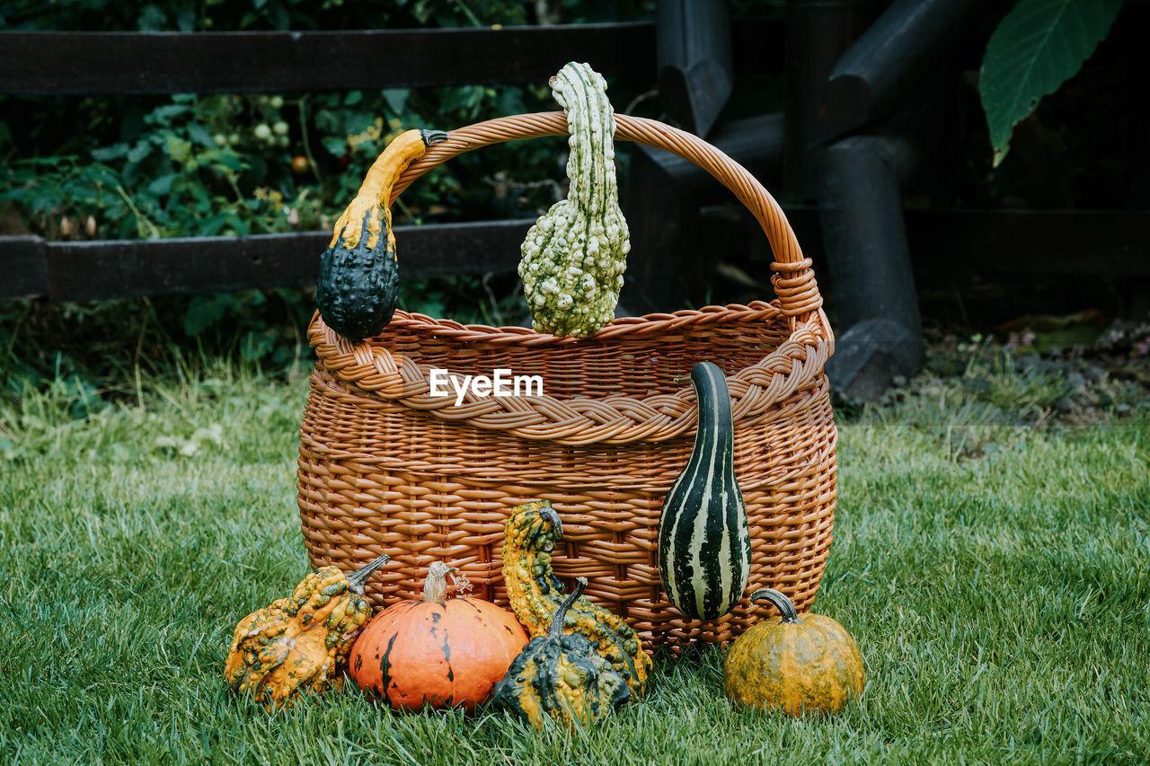 Pumpkins with basket on grassy field