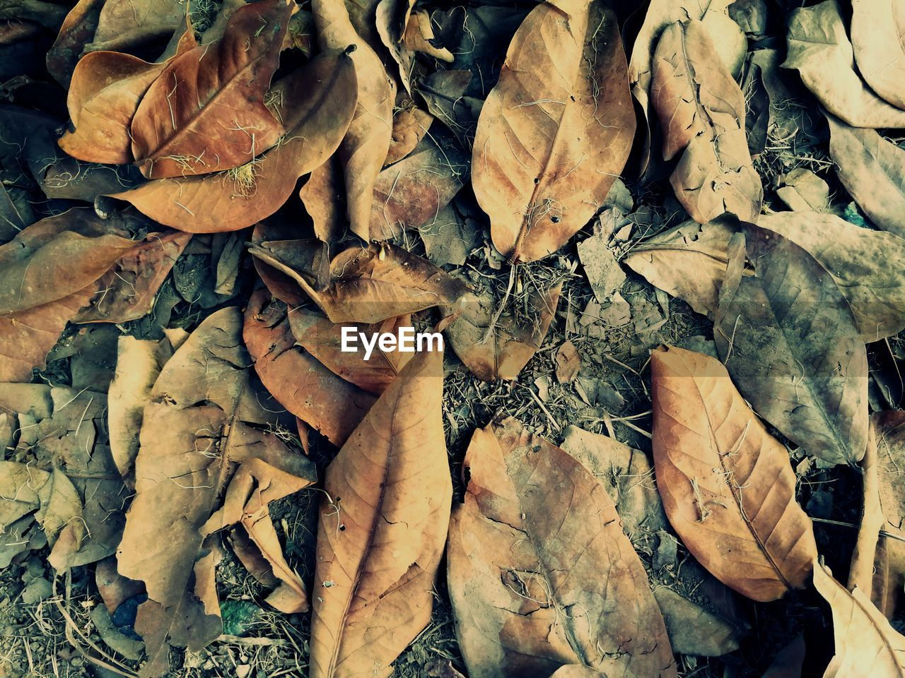 leaf, autumn, change, dry, leaves, abundance, fallen, large group of objects, outdoors, high angle view, day, no people, nature, fragility, close-up