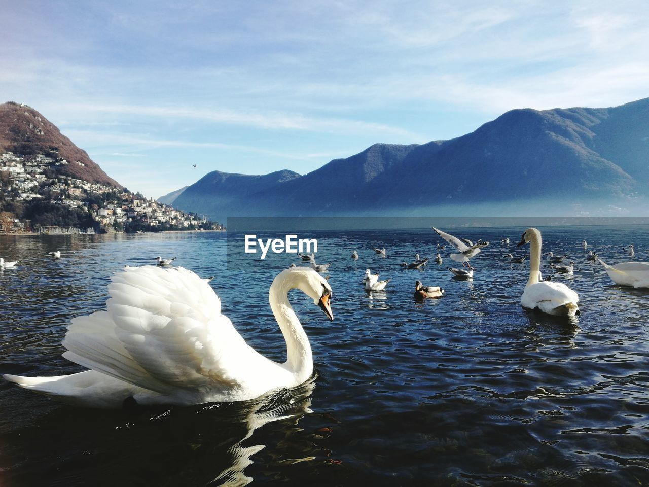 Swans Swimming In Lake Against Sky