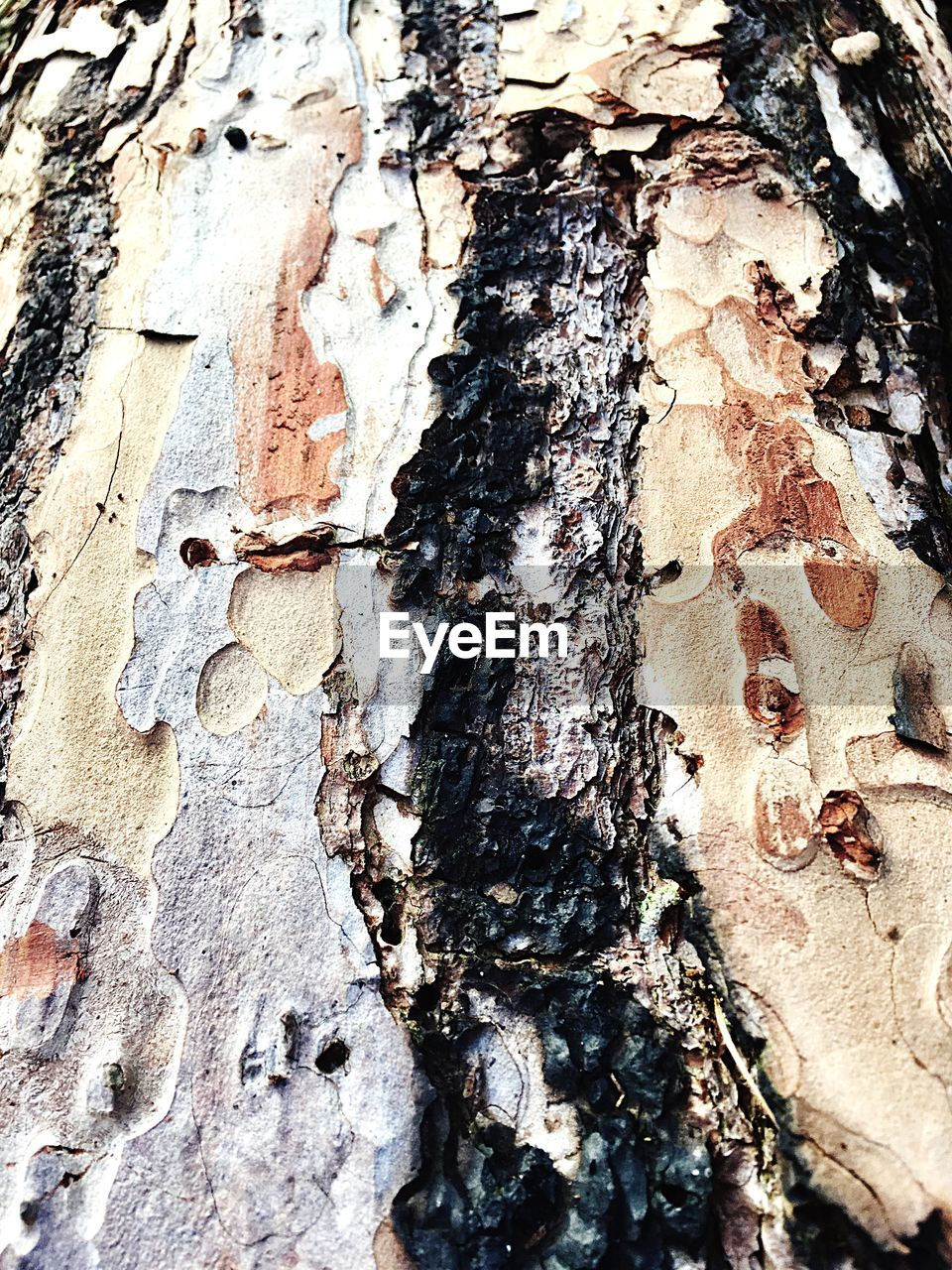 tree trunk, textured, rough, full frame, close-up, backgrounds, bark, weathered, day, tree, no people, outdoors, nature