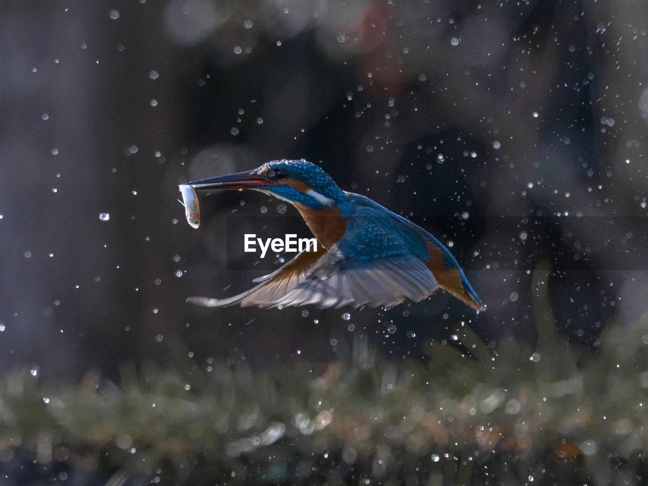 Close-Up Of Bird Hunting Fish