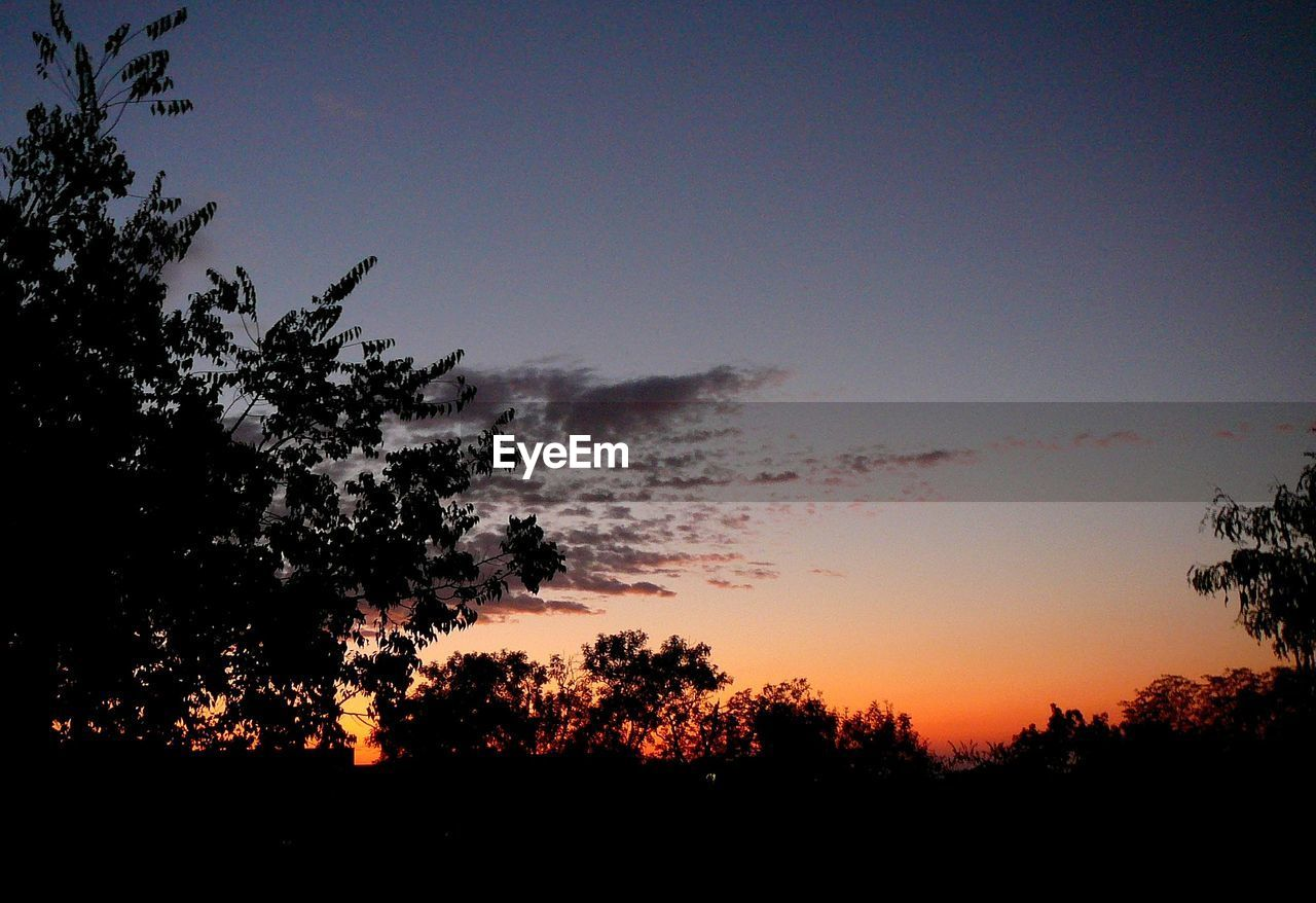 sky, silhouette, tree, beauty in nature, sunset, tranquility, plant, scenics - nature, tranquil scene, nature, no people, orange color, outdoors, environment, idyllic, growth, copy space, clear sky, non-urban scene, land