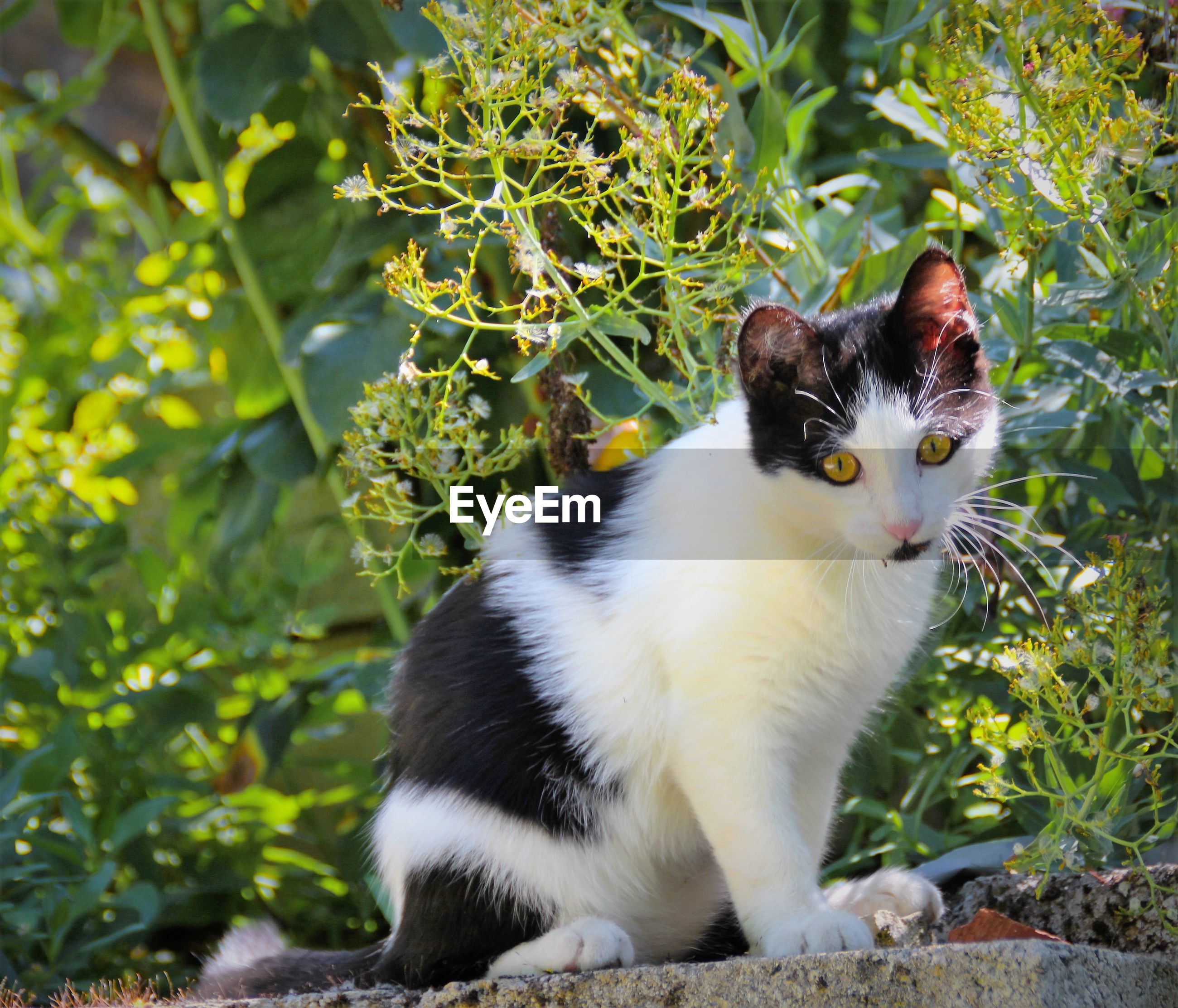Portrait of cat sitting on retaining wall by plants