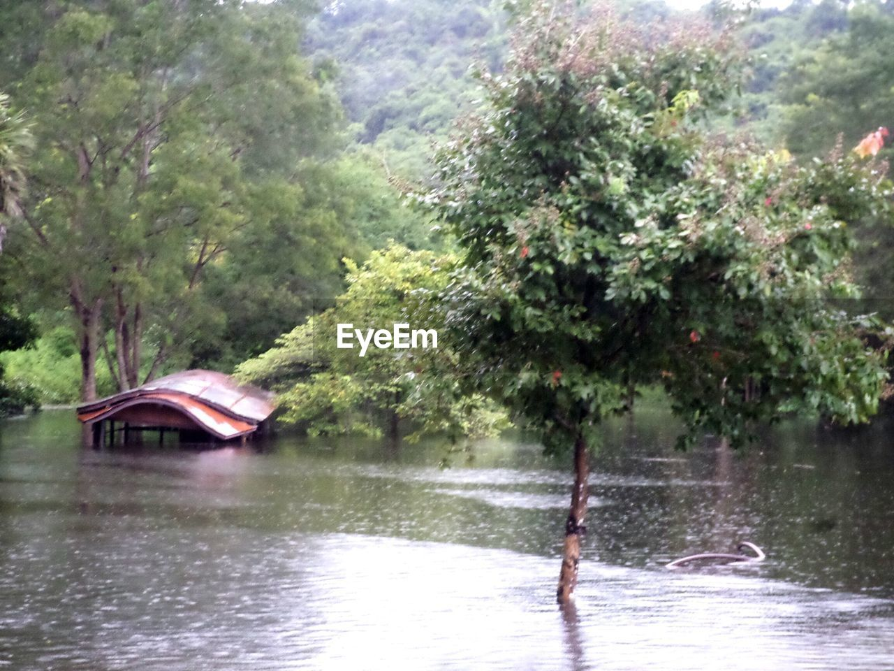 SCENIC VIEW OF RIVER AGAINST TREES IN FOREST
