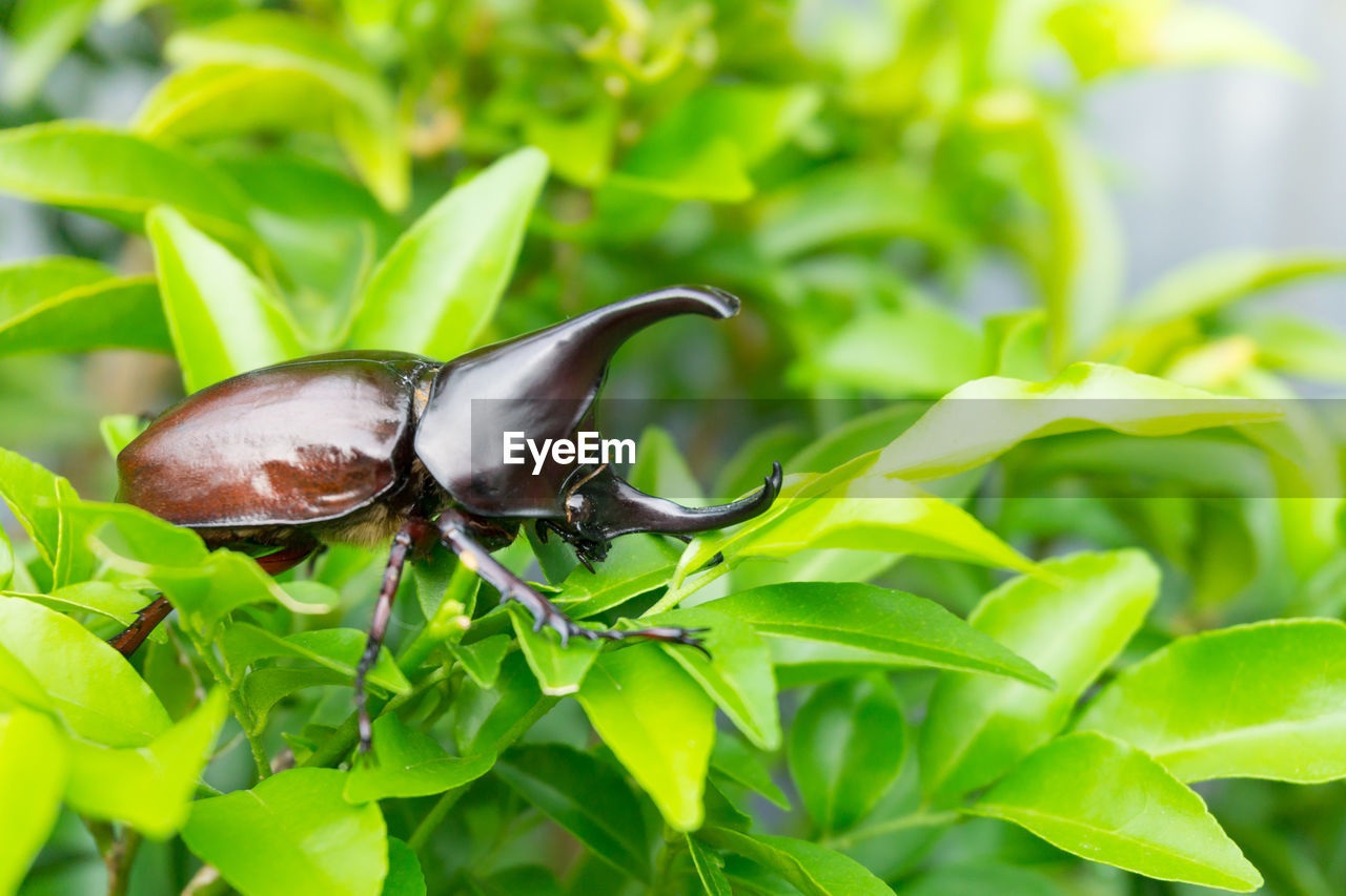 animal wildlife, animal themes, animals in the wild, one animal, animal, green color, invertebrate, leaf, plant part, insect, close-up, growth, plant, no people, nature, day, beauty in nature, focus on foreground, vulnerability, fragility, outdoors