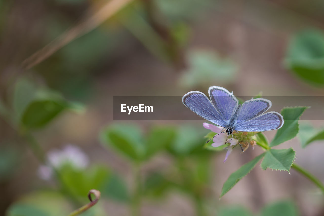 plant, flower, flowering plant, growth, beauty in nature, close-up, petal, vulnerability, freshness, fragility, flower head, inflorescence, focus on foreground, no people, day, purple, selective focus, nature, one animal, plant part, pollen, pollination