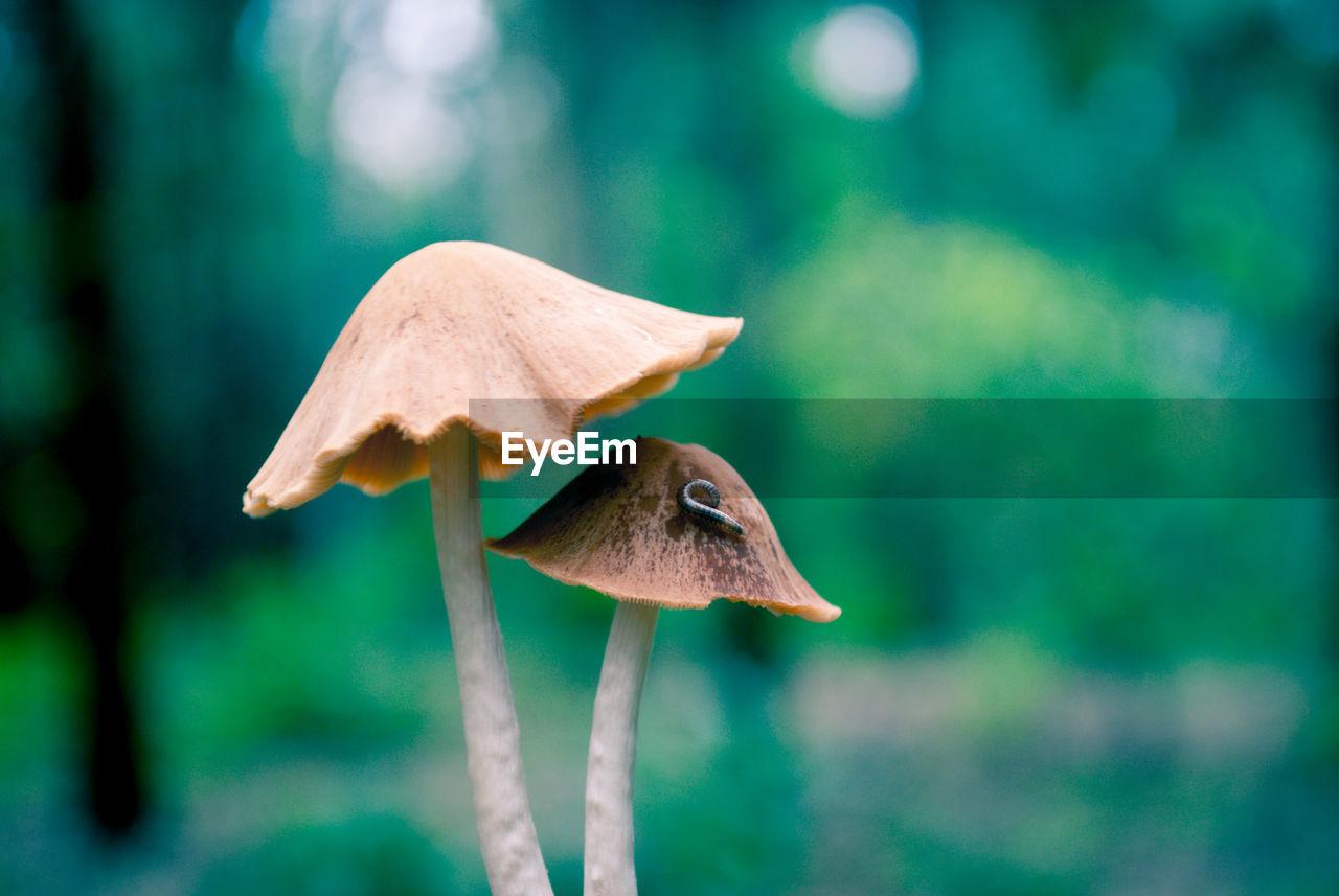 Close-up of worm on mushroom