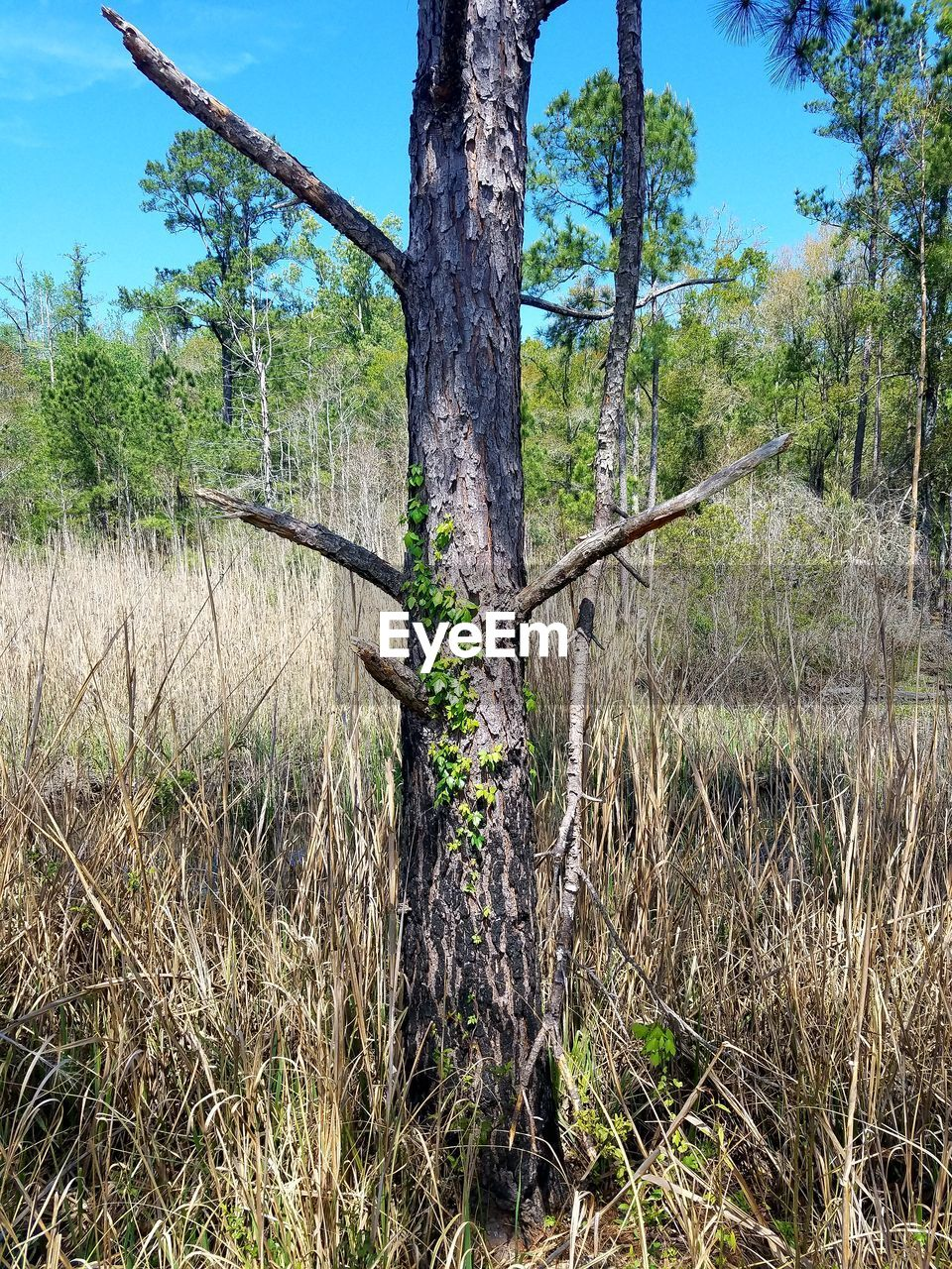 tree, tree trunk, nature, no people, sky, day, growth, tranquility, landscape, outdoors, beauty in nature, scenics, tranquil scene, forest, green color, grass, dead tree