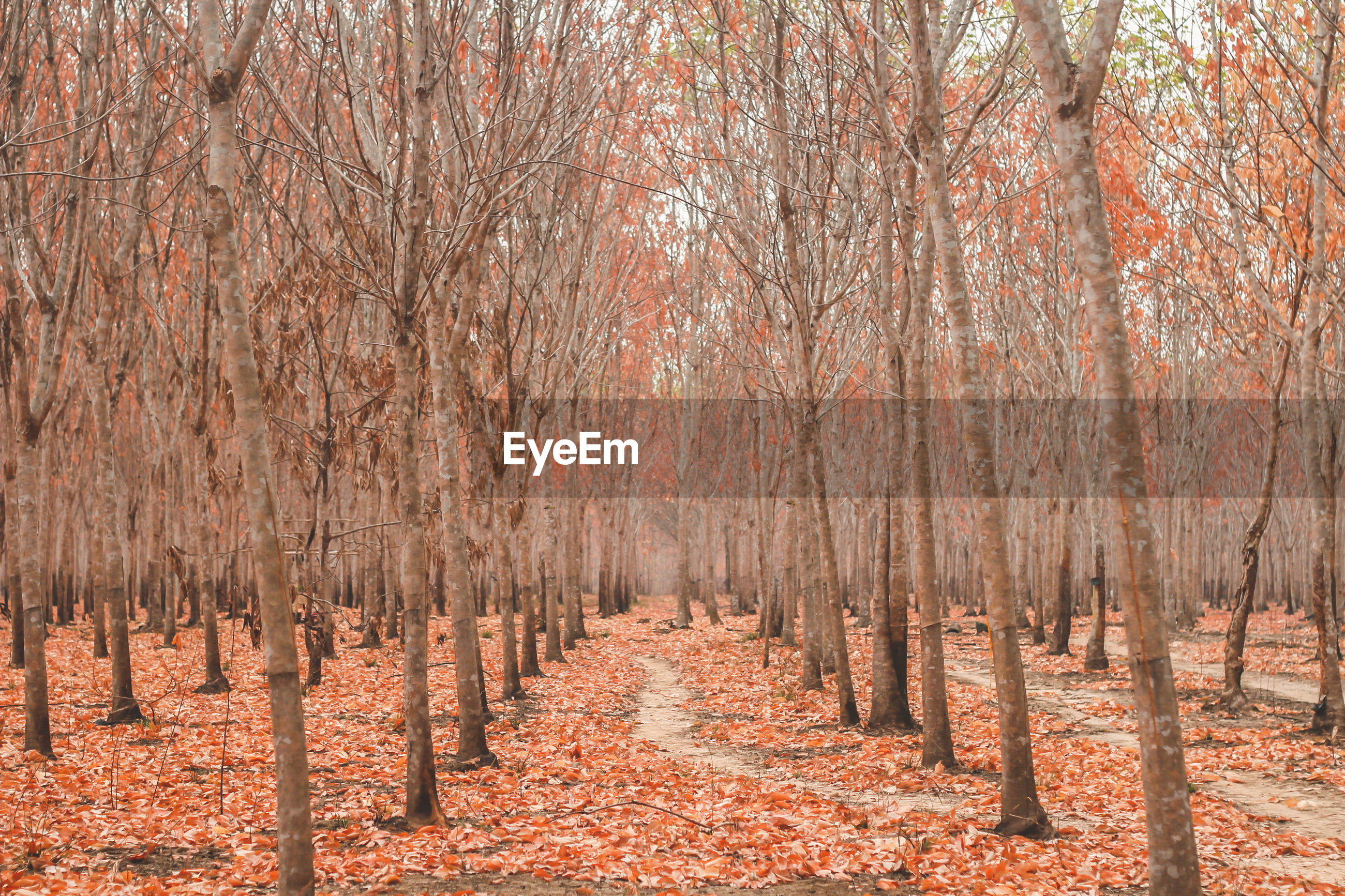 PANORAMIC SHOT OF TREES IN FOREST DURING AUTUMN
