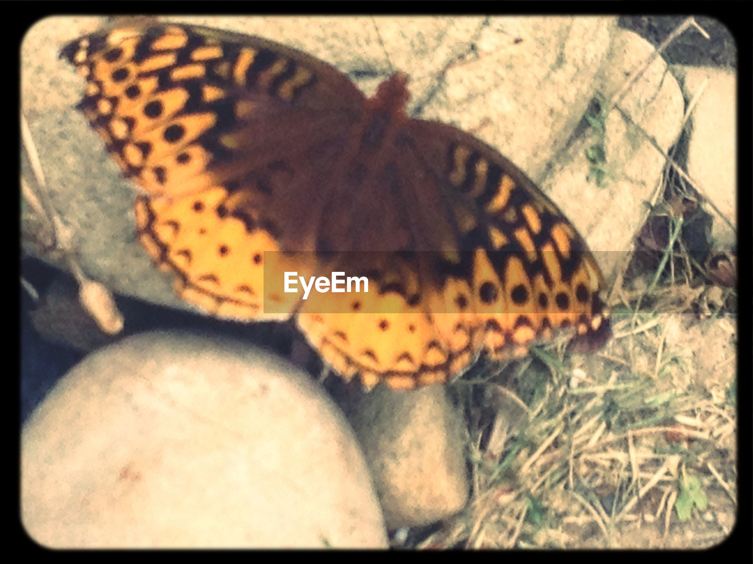 Close-up of butterfly perching on rock