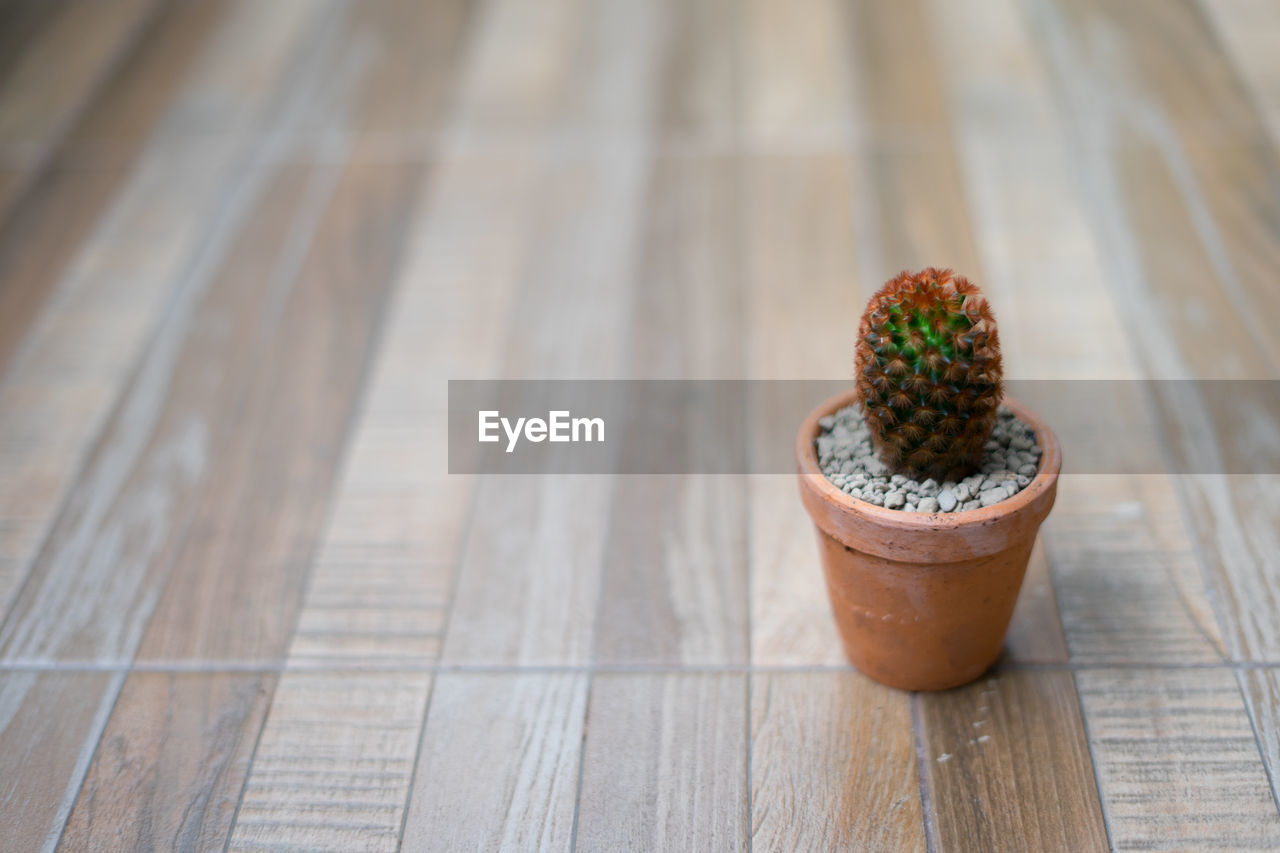 wood - material, table, potted plant, focus on foreground, food and drink, no people, close-up, still life, indoors, high angle view, food, succulent plant, cactus, freshness, day, wellbeing, nature, plant, container