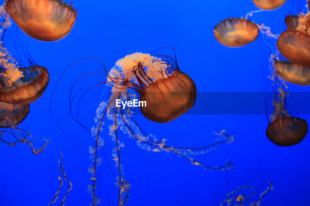 Close-Up Of Jellyfish In Water Against Blue Sky