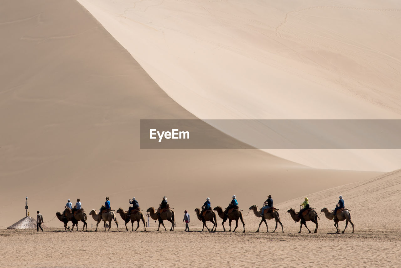 domestic animals, desert, mammal, horse, sand, nature, livestock, outdoors, men, real people, landscape, day, arid climate, sand dune, beauty in nature, sky, one person, people