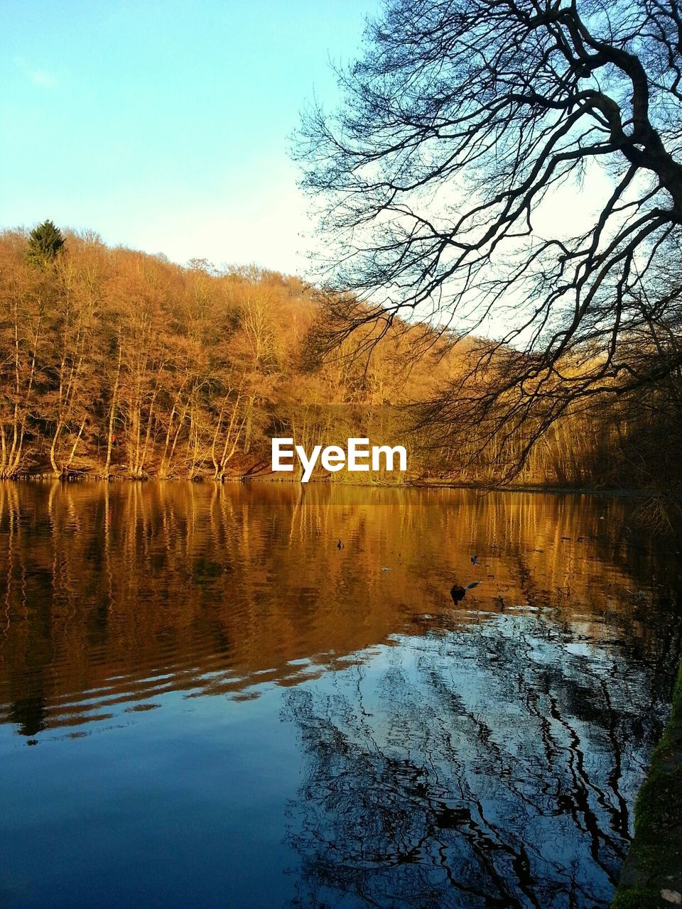 reflection, lake, water, tree, nature, tranquil scene, beauty in nature, scenics, tranquility, outdoors, no people, day, sky, forest, bare tree