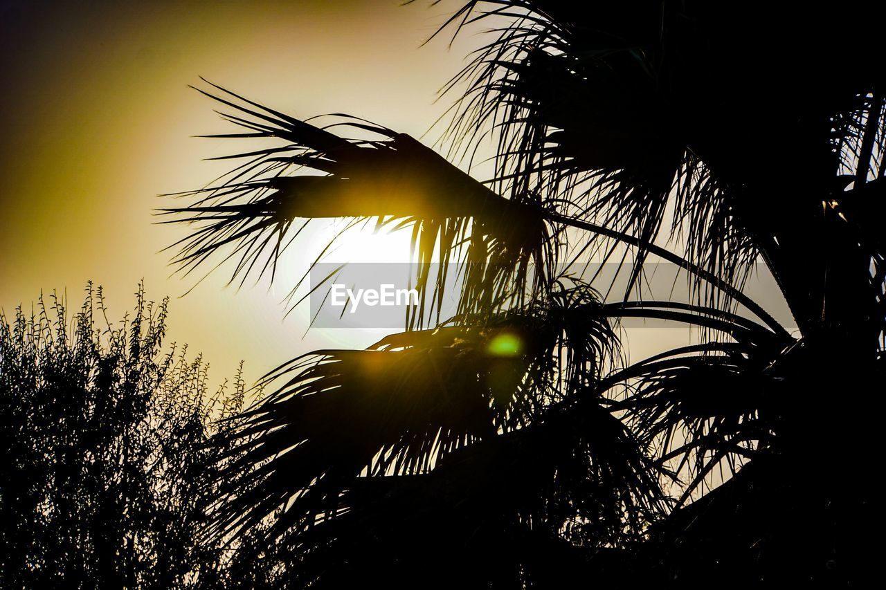 silhouette, plant, sky, tree, sunset, growth, beauty in nature, no people, nature, tranquility, tropical climate, palm tree, scenics - nature, sunlight, sun, low angle view, back lit, outdoors, tranquil scene, water, palm leaf