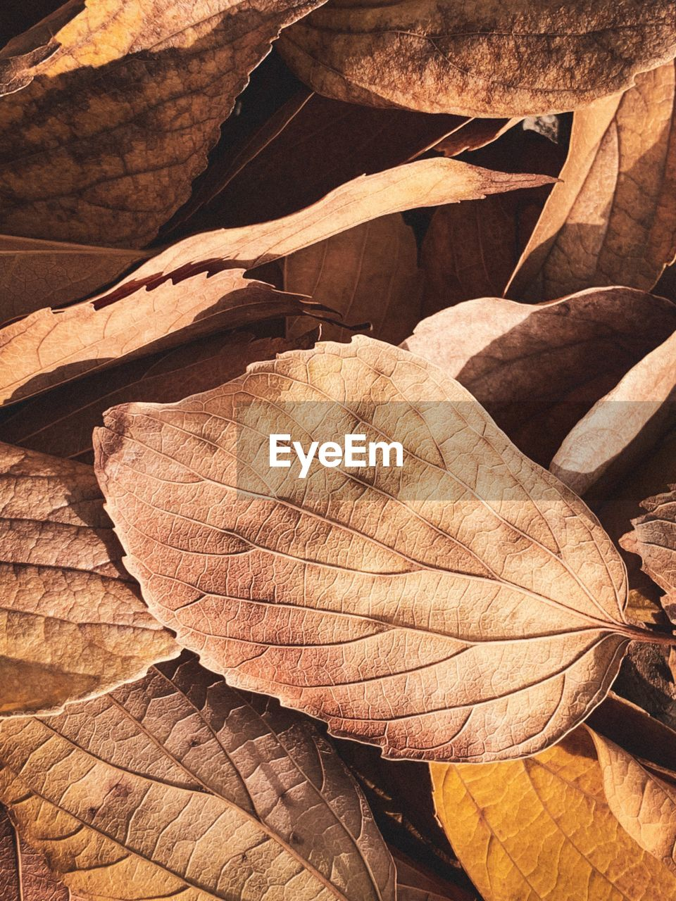 plant part, leaf, nature, day, no people, brown, dry, close-up, full frame, sunlight, autumn, leaf vein, leaves, backgrounds, plant, beauty in nature, outdoors, change, tranquility, pattern, natural condition, dried, arid climate