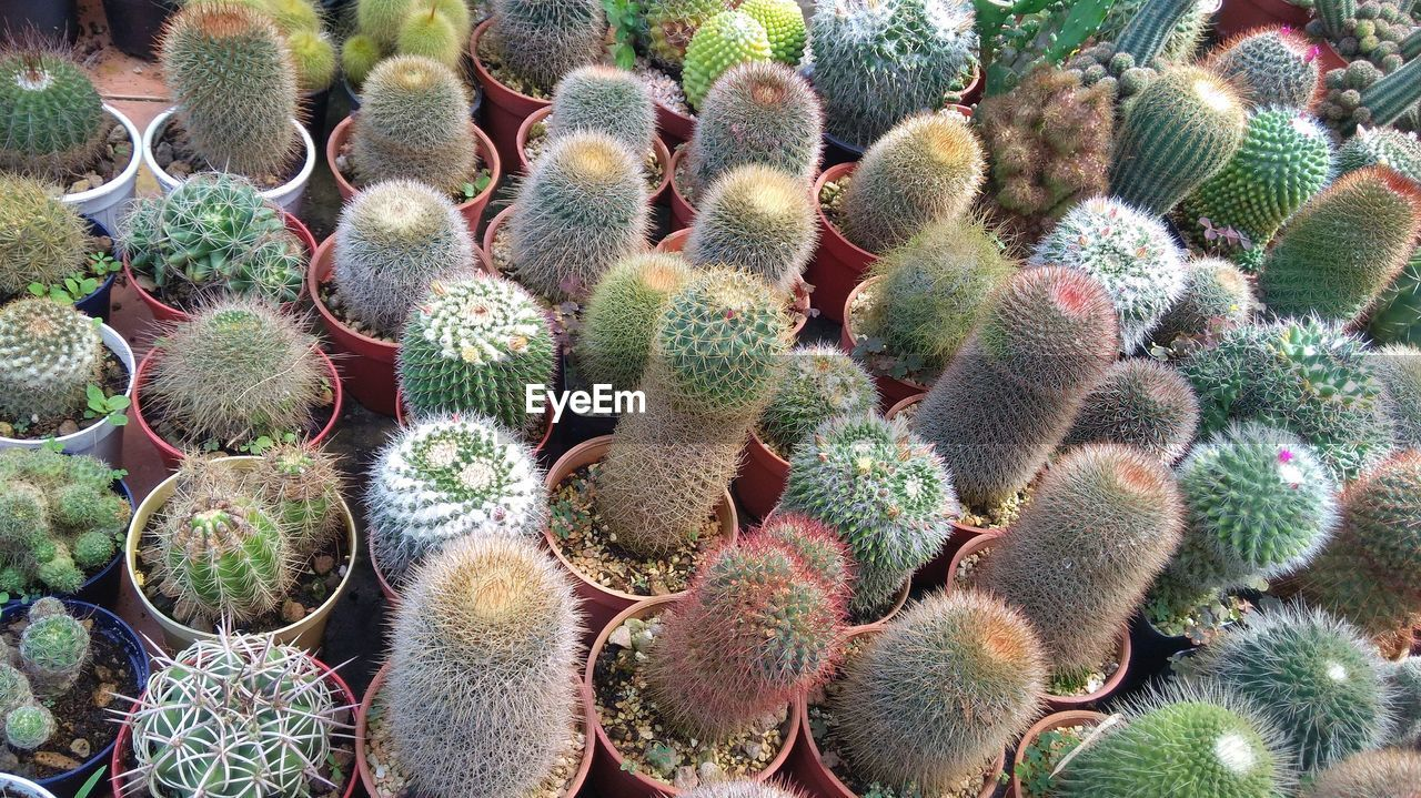 succulent plant, cactus, thorn, growth, barrel cactus, sharp, spiked, plant, no people, nature, green color, day, high angle view, potted plant, full frame, close-up, beauty in nature, field, outdoors, natural pattern, spiky, plant nursery