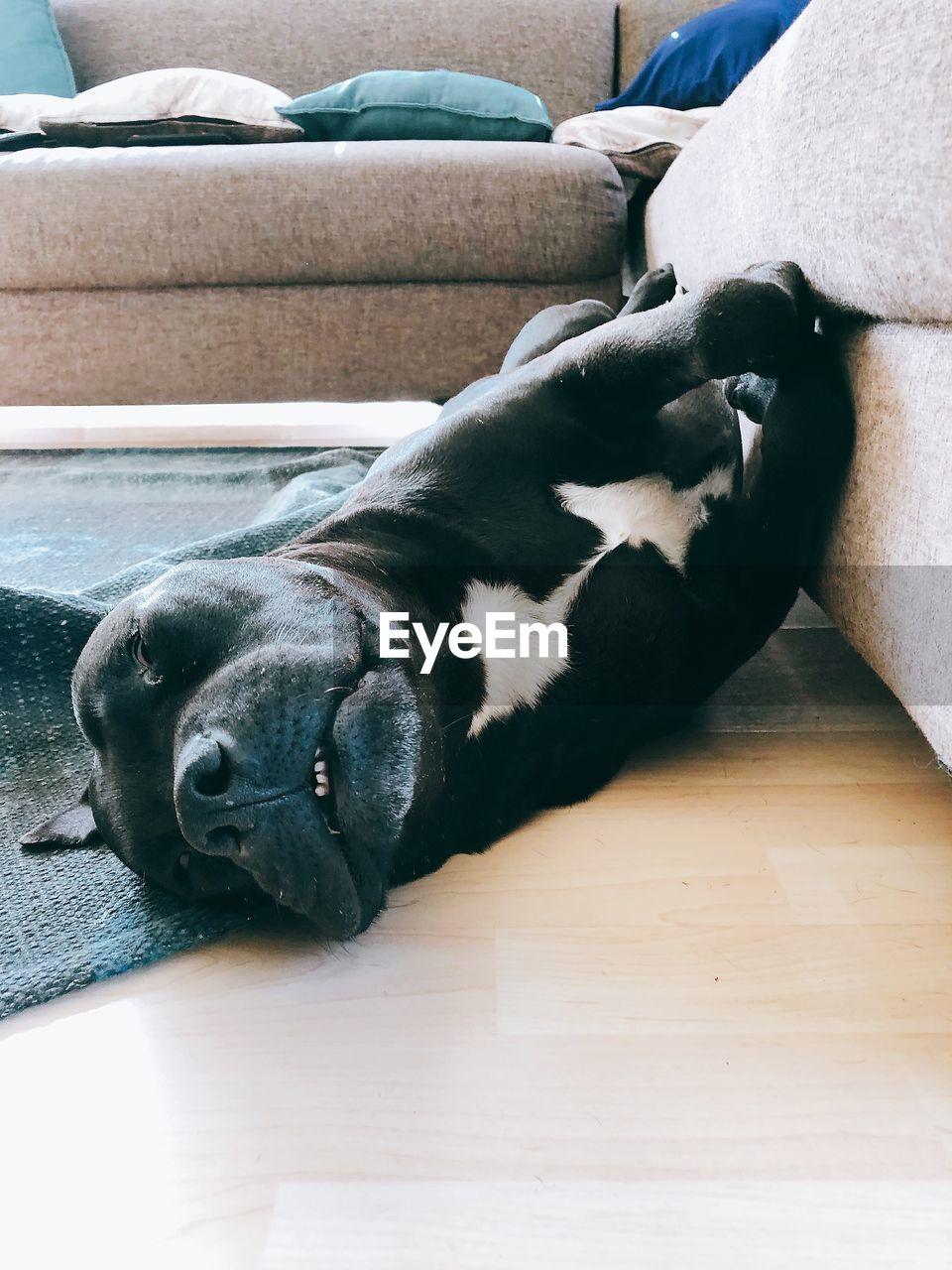 DOG SLEEPING ON WOODEN FLOOR