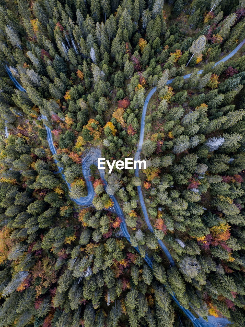 nature, beauty in nature, curve, high angle view, no people, green color, plant, aerial view, backgrounds, full frame, scenics, tree, eyesight, day, outdoors