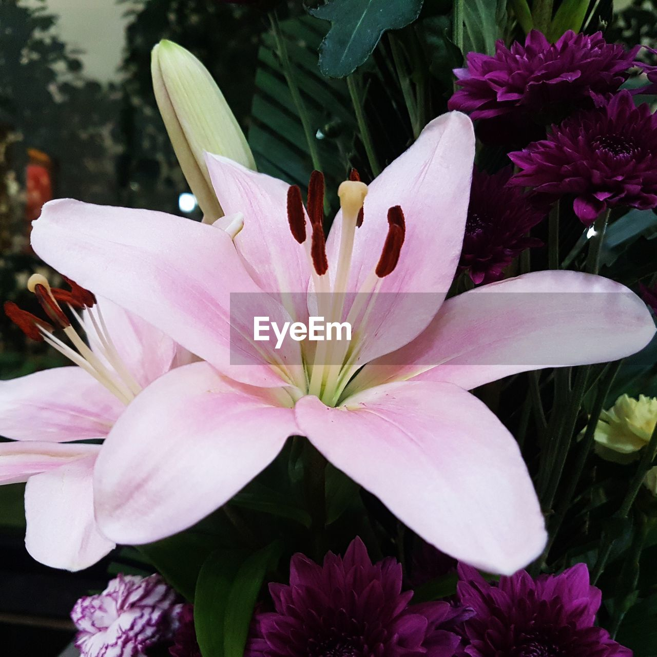 flower, petal, beauty in nature, fragility, growth, flower head, freshness, nature, pink color, plant, no people, outdoors, day, close-up, blooming, springtime