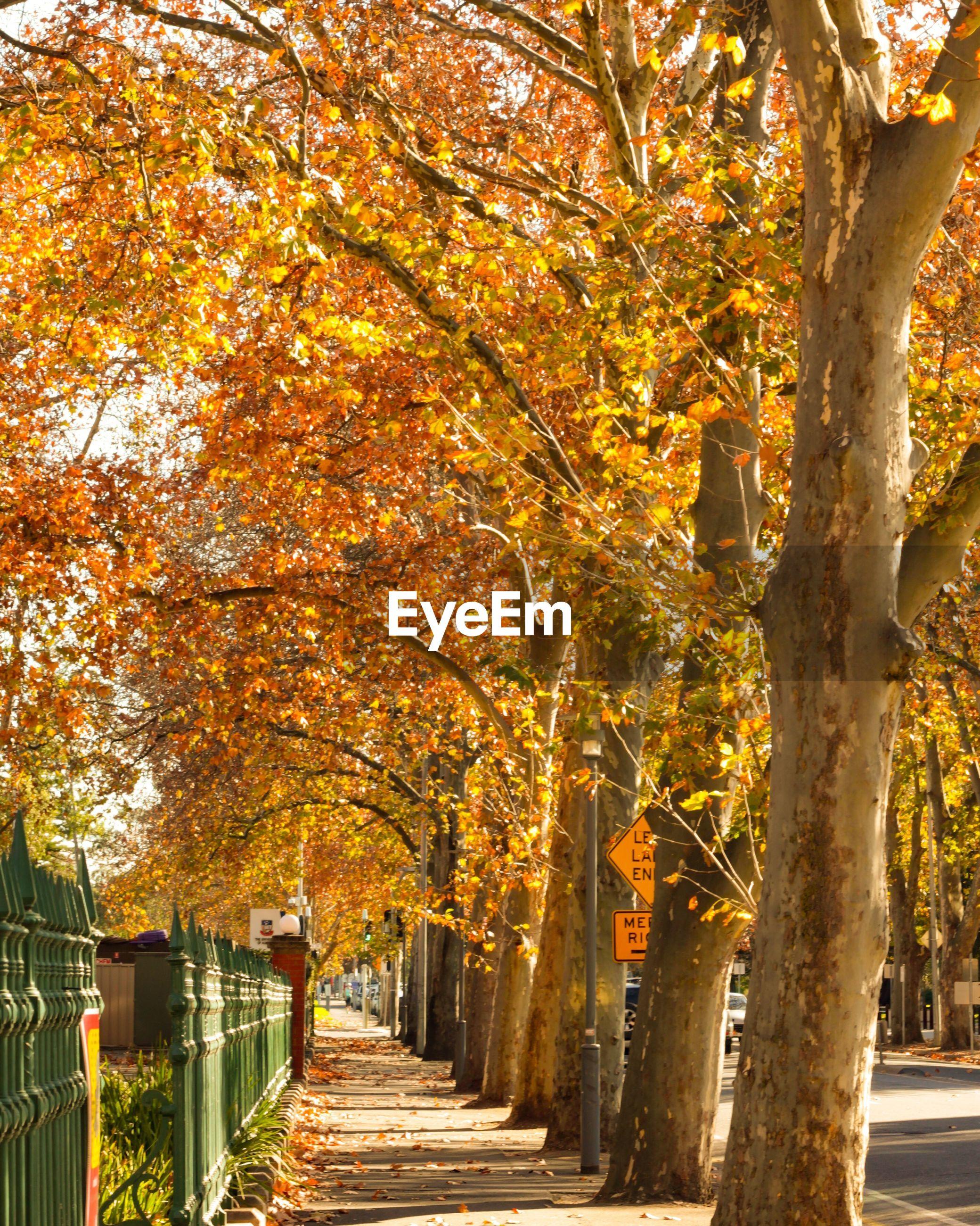 FOOTPATH IN PARK DURING AUTUMN