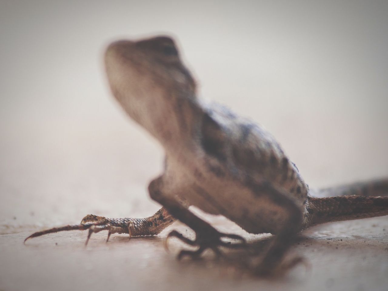 one animal, animal themes, selective focus, animals in the wild, no people, close-up, day, nature, reptile, outdoors