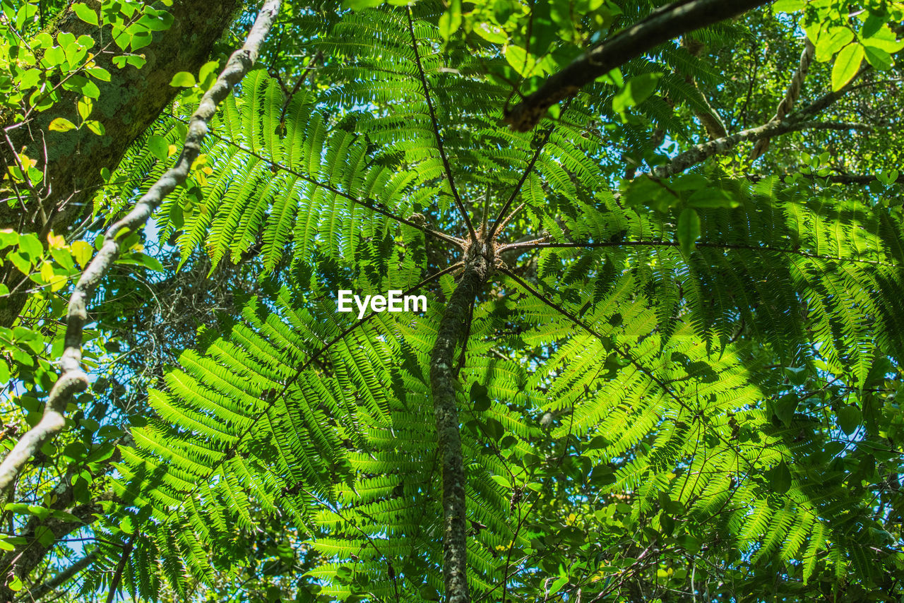 nature, leaf, green color, growth, green, beauty in nature, day, forest, no people, outdoors, freshness, tree, water, close-up