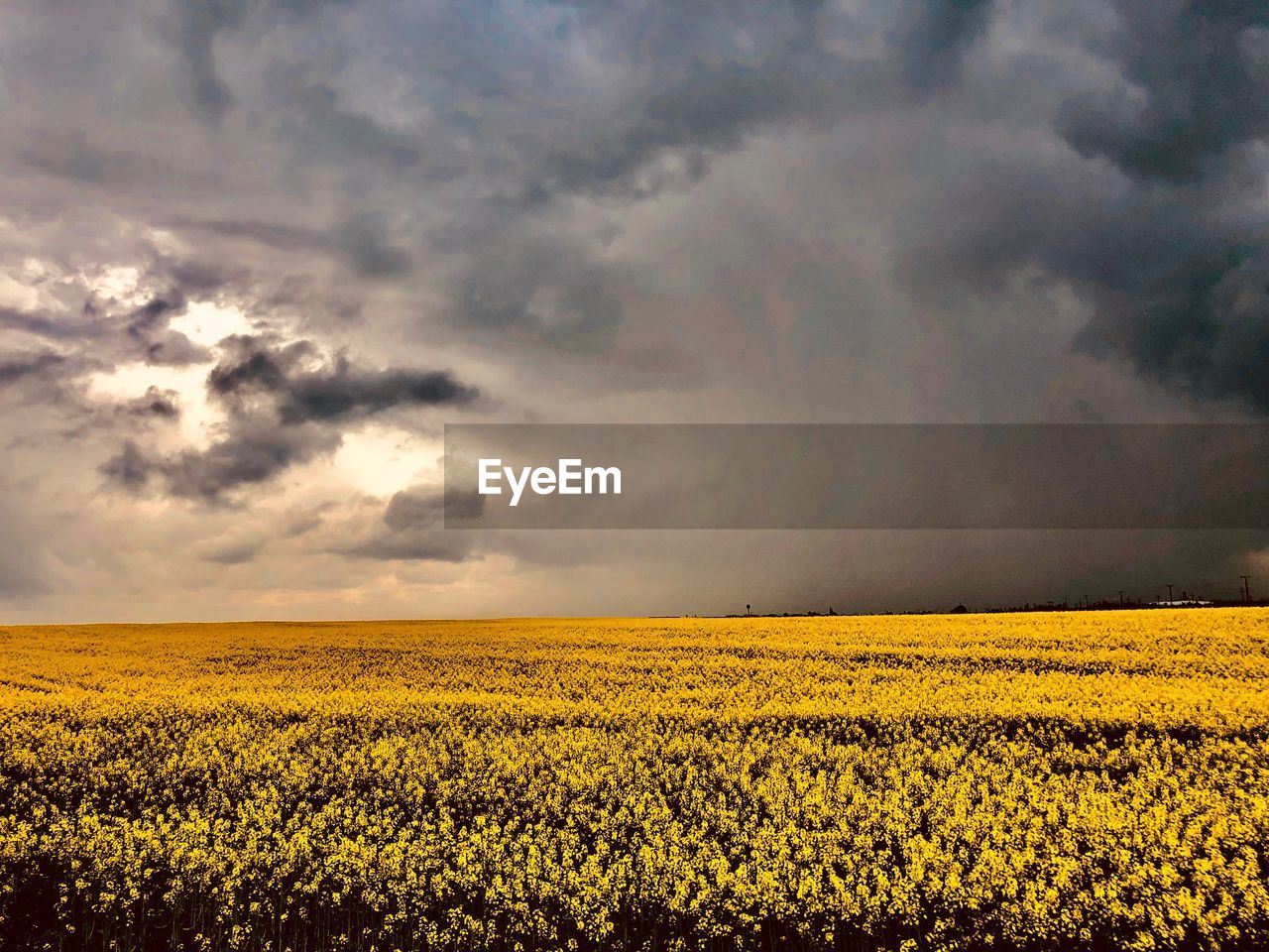 yellow, beauty in nature, sky, flower, field, tranquil scene, agriculture, scenics - nature, cloud - sky, tranquility, land, flowering plant, rural scene, environment, landscape, plant, growth, farm, freshness, oilseed rape, no people, springtime, outdoors, flower head