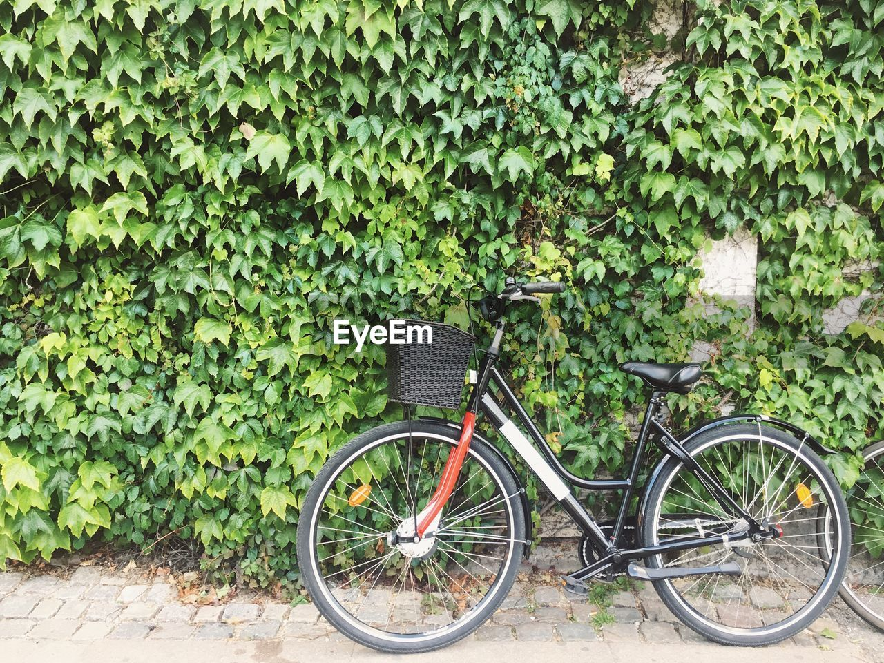 BICYCLE WITH IVY