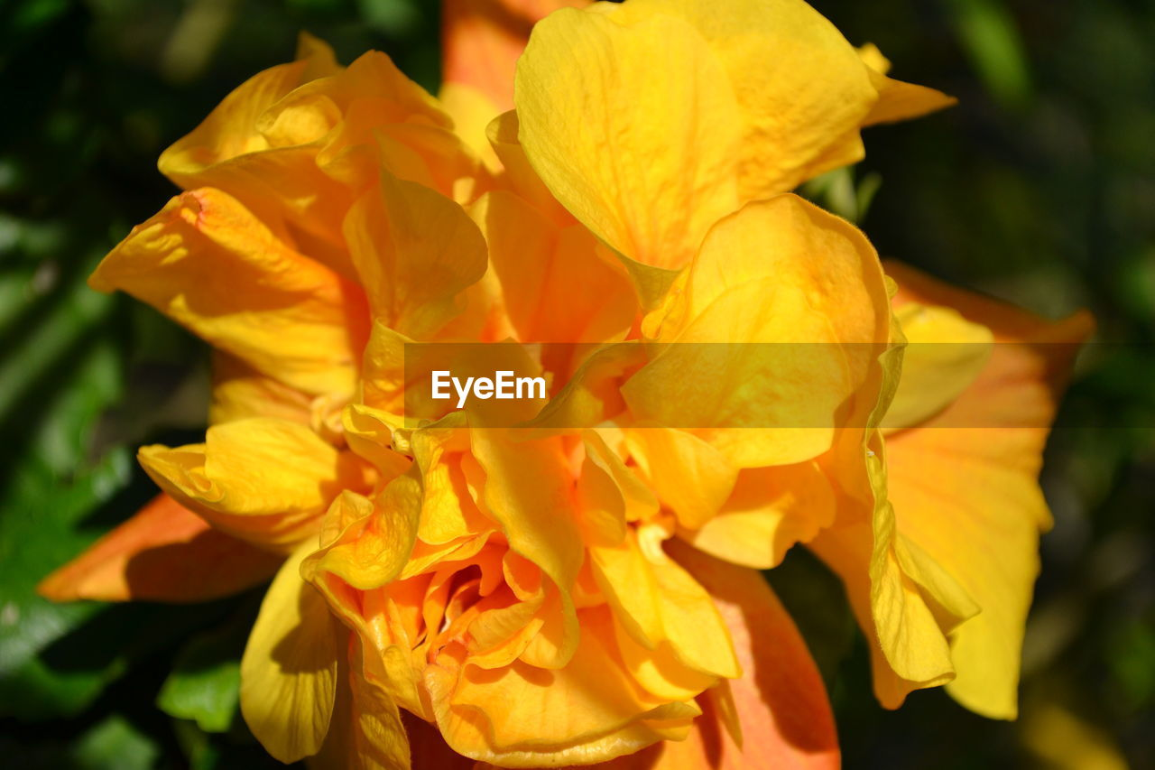 flower, petal, beauty in nature, fragility, flower head, nature, freshness, yellow, growth, close-up, plant, focus on foreground, outdoors, no people, day, blooming, day lily